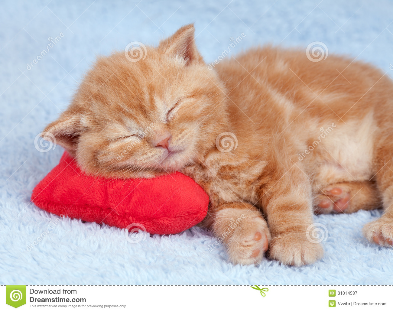 Little Cat Sleeping On The Pillow Royalty Free Stock