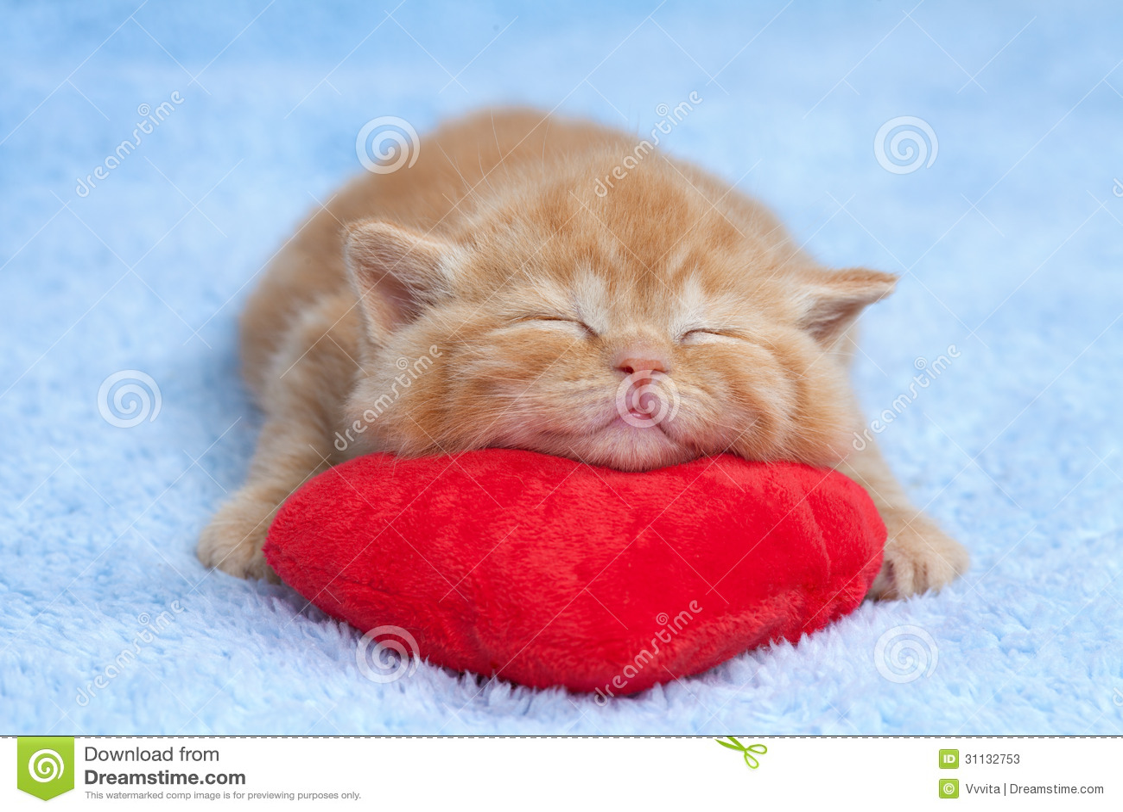 Little cat sleeping on the pillow