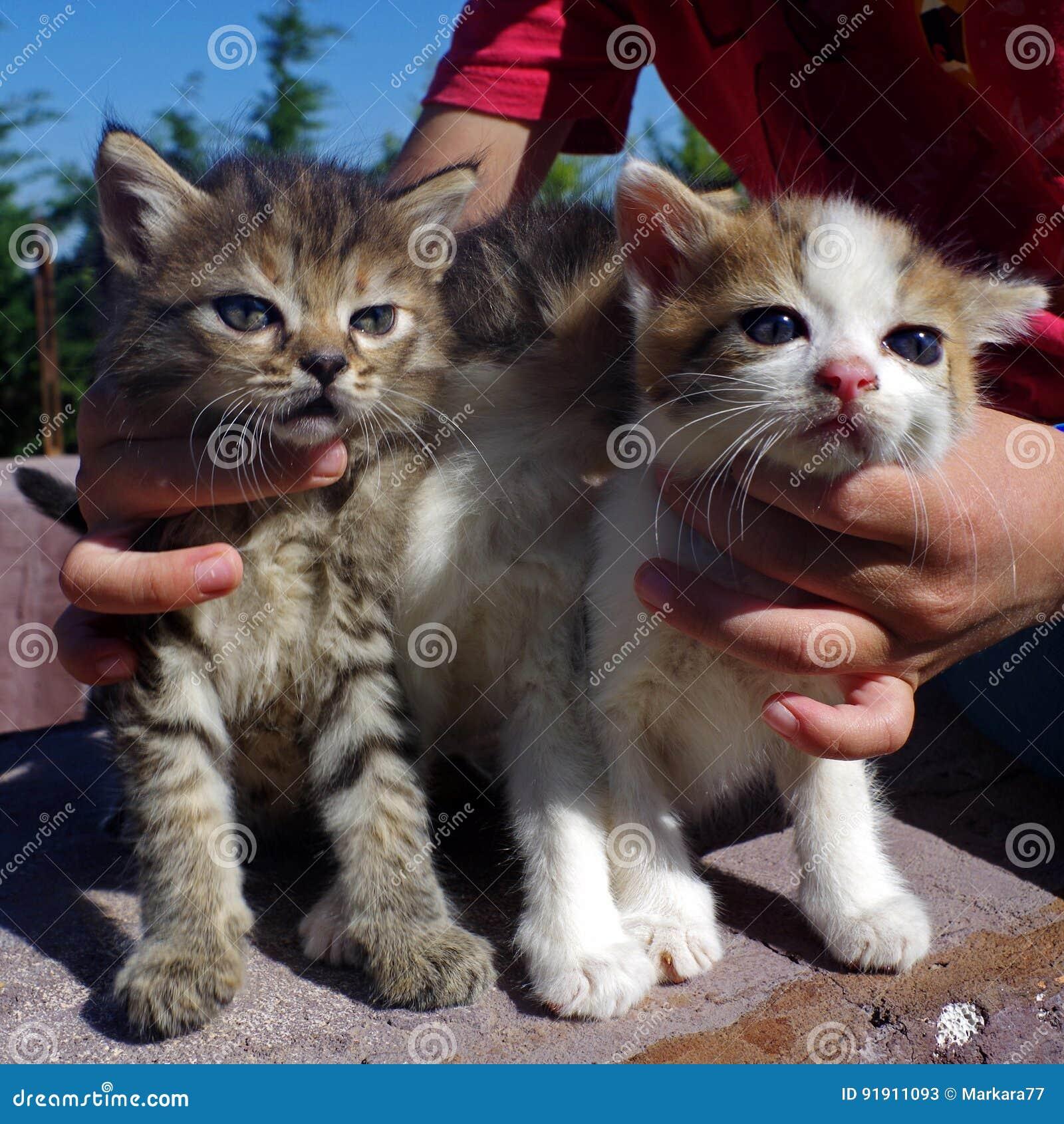 Little Cats In Childrens Hug