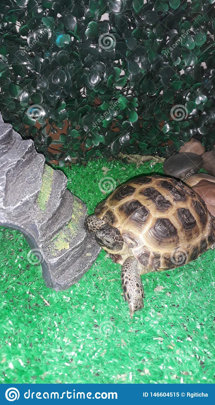 Little Central Asian Land Turtle In The Terrarium Stock Image Image Of Young Arrangement 146604515