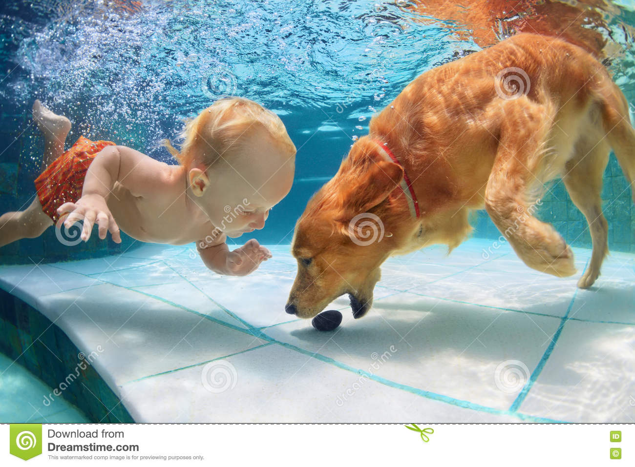 Little child swim underwater and play with dog stock image image of happy baby 70707941 for How to train your dog to swim in the pool
