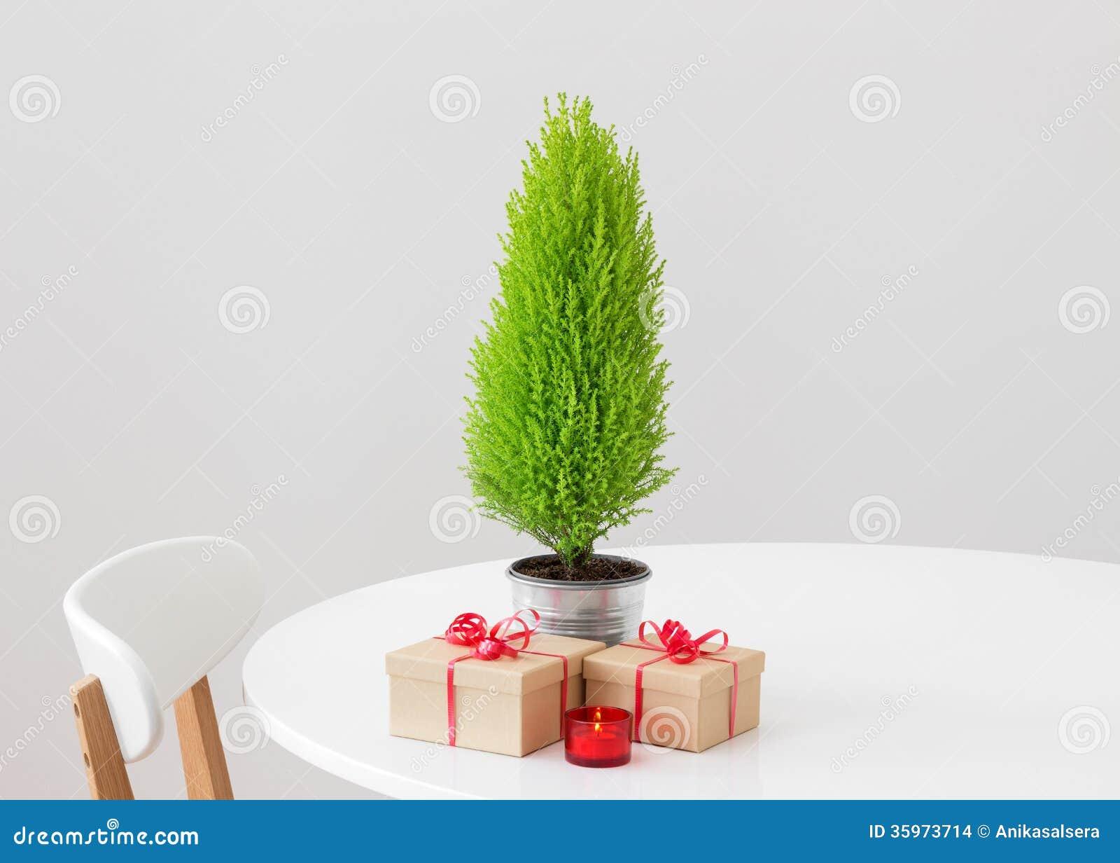 Как вырасти елку в домашних условиях