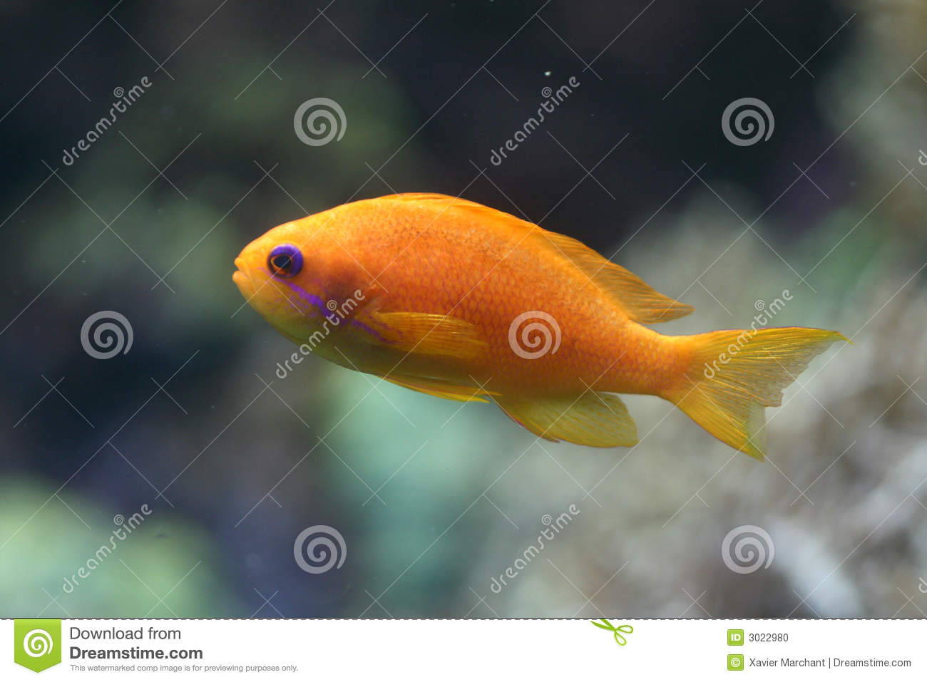 Little coral fish stock photo image 3022980 for Little fish swimming