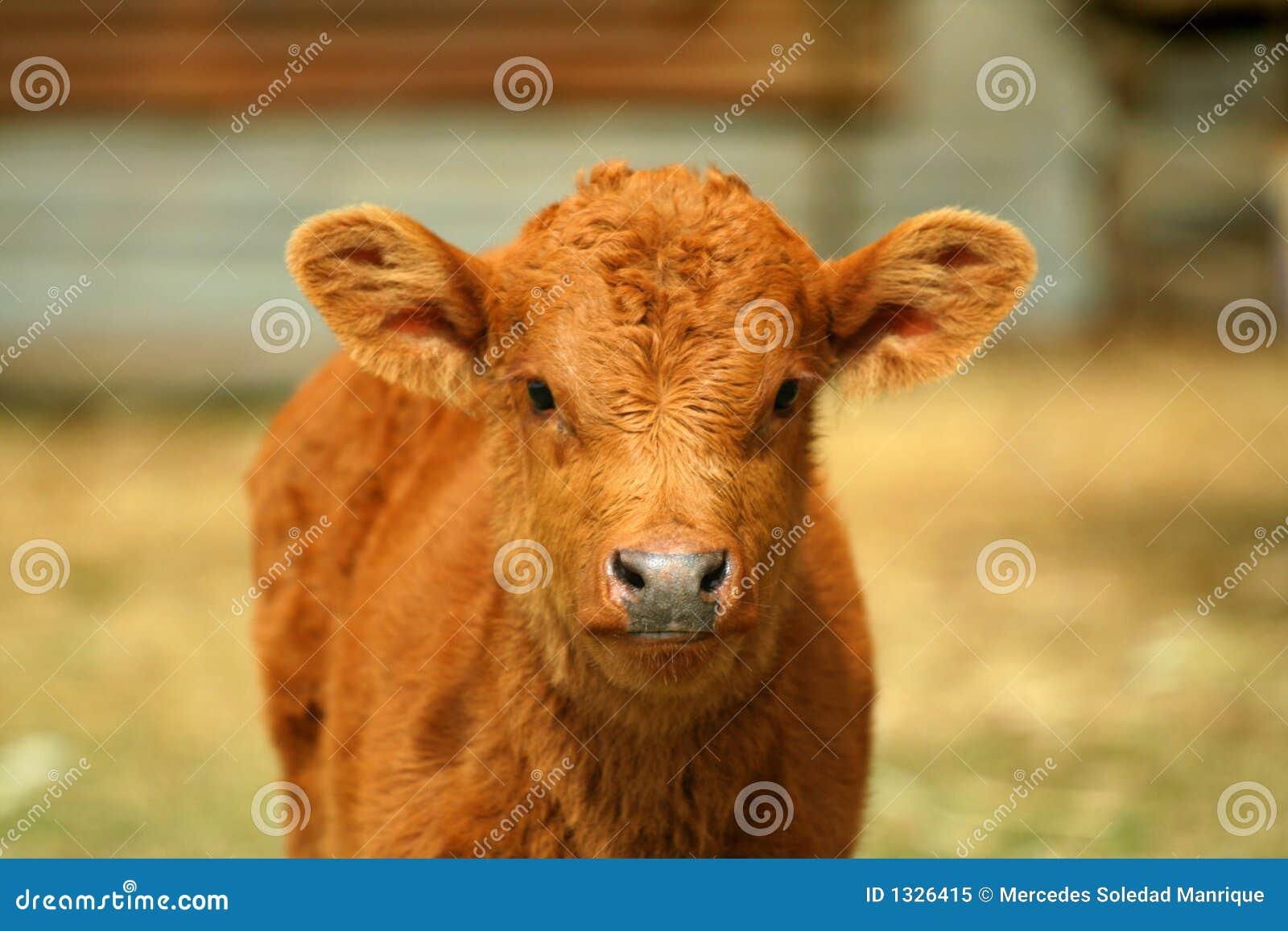 bull face vector