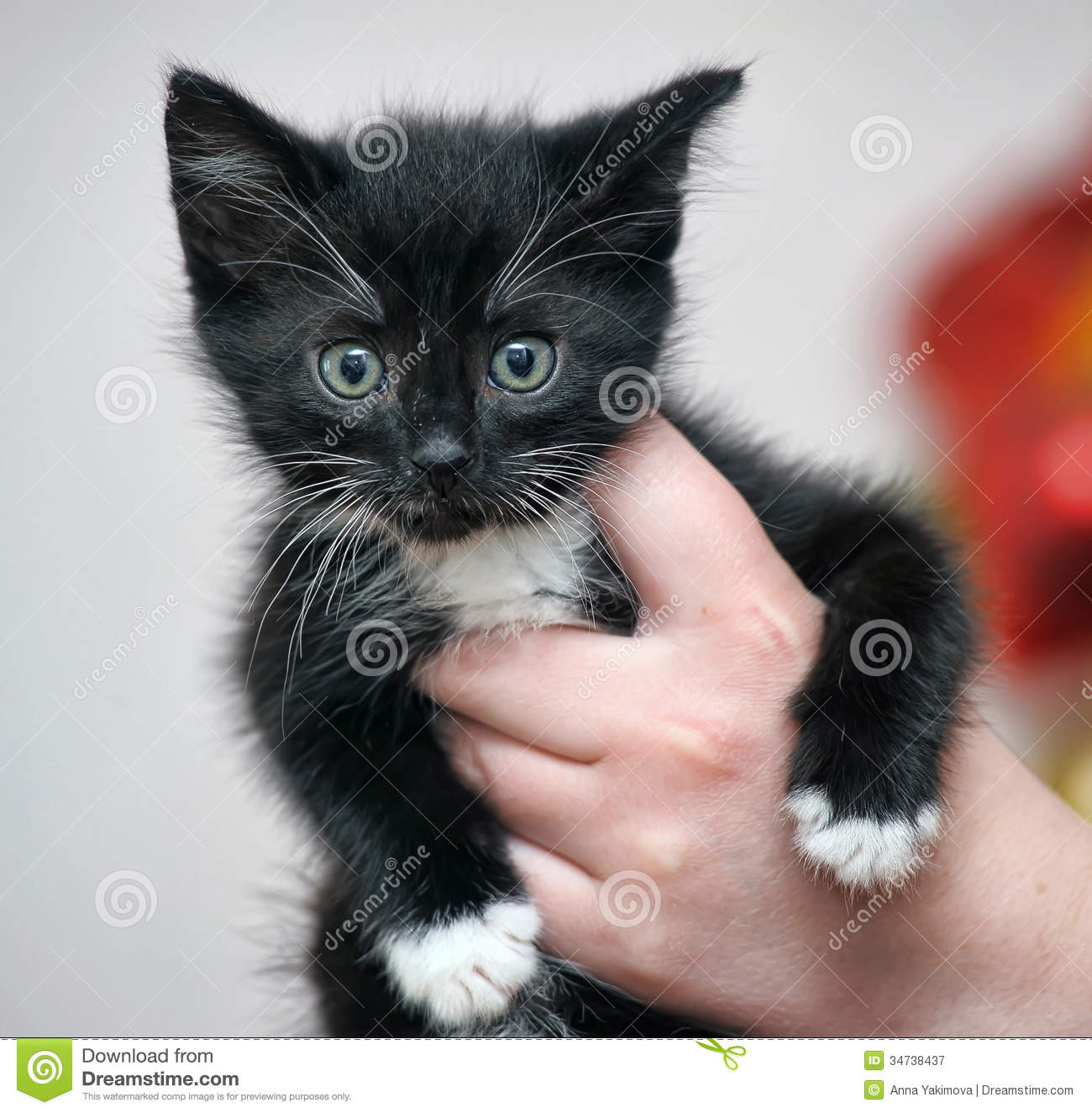 Little cute kitten stock image. Image of eyes, pets, kitty ...