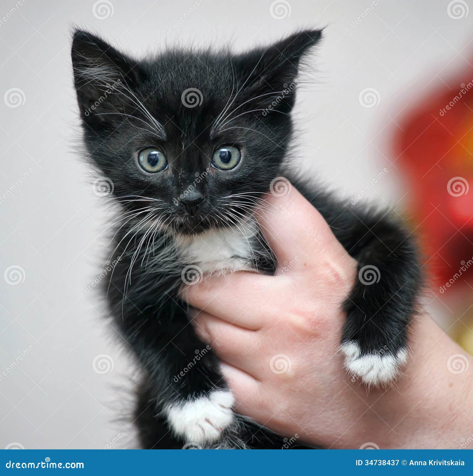 Little Cute Kitten Royalty Free Stock graphy Image