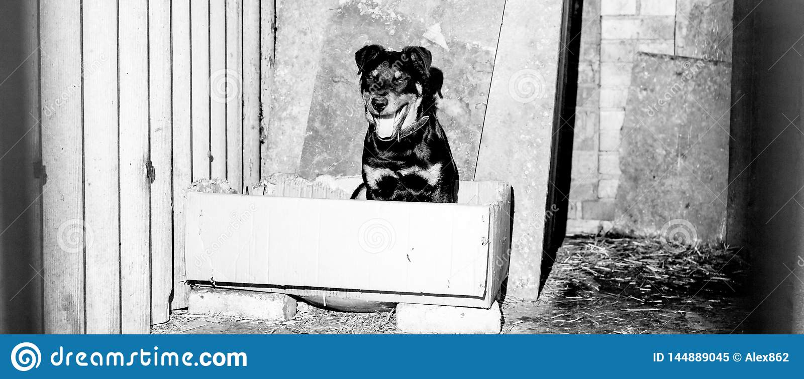 Little cute rottweiler puppy in an aviary. Monochrome stylish photo