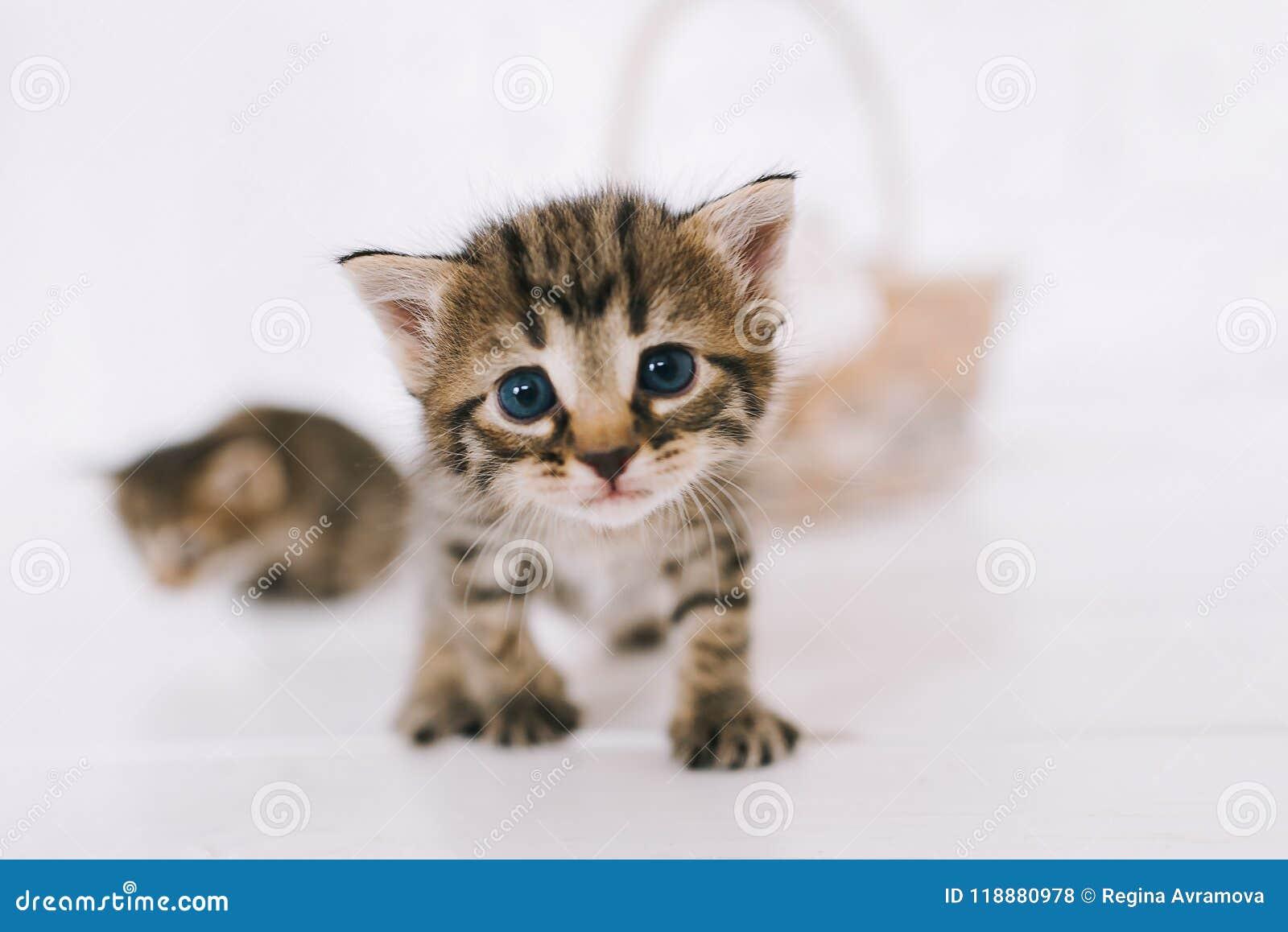 Little cute striped kittens