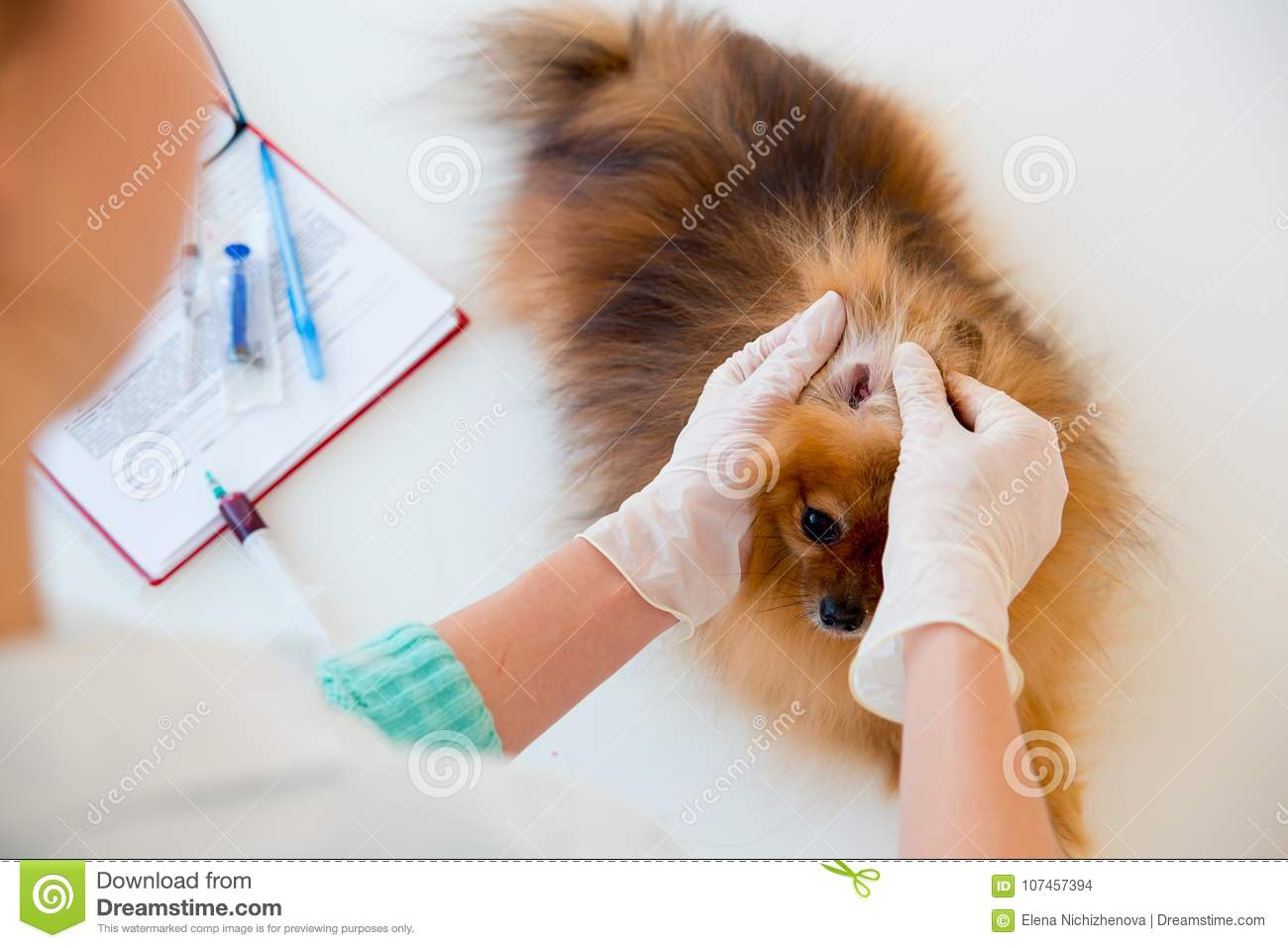 Dog with a vet