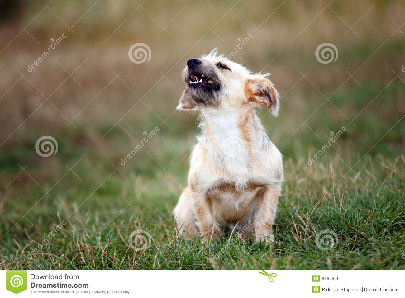 how to stop little dogs from barking