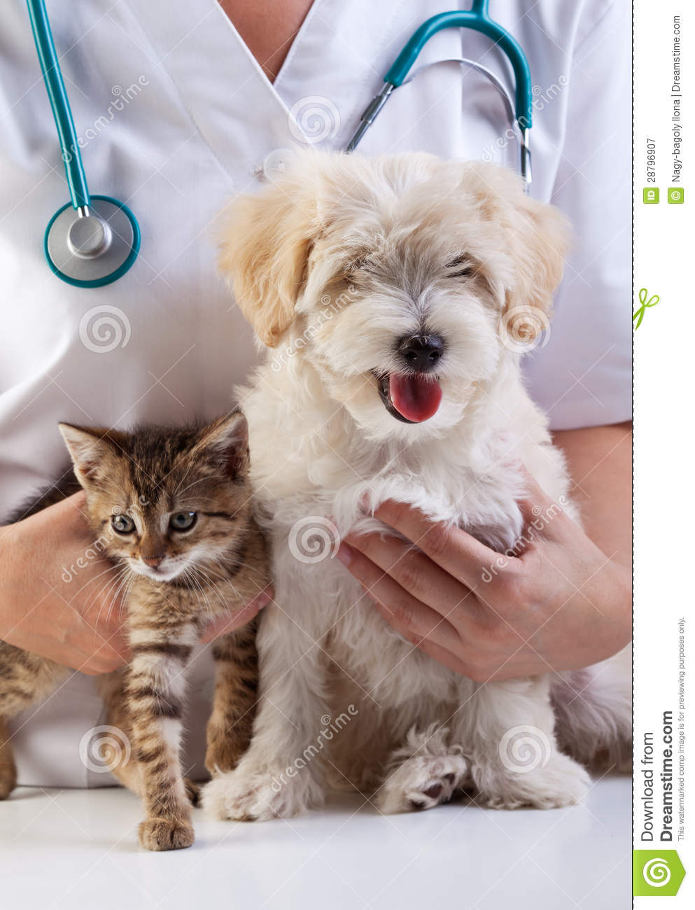 The Dog And Cat Doctor Ny