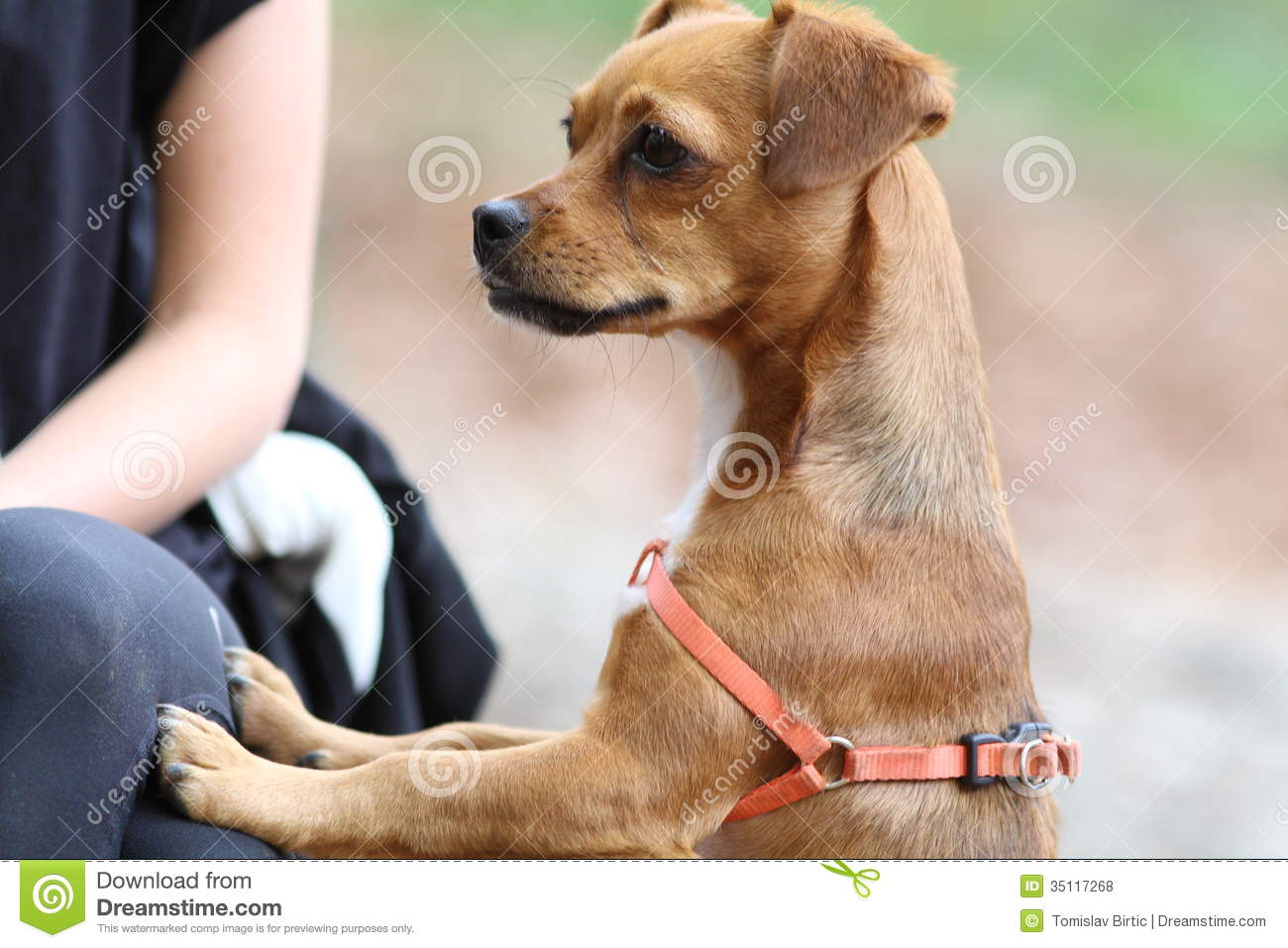 Little Dog Human Touch Contact Royalty Free Stock