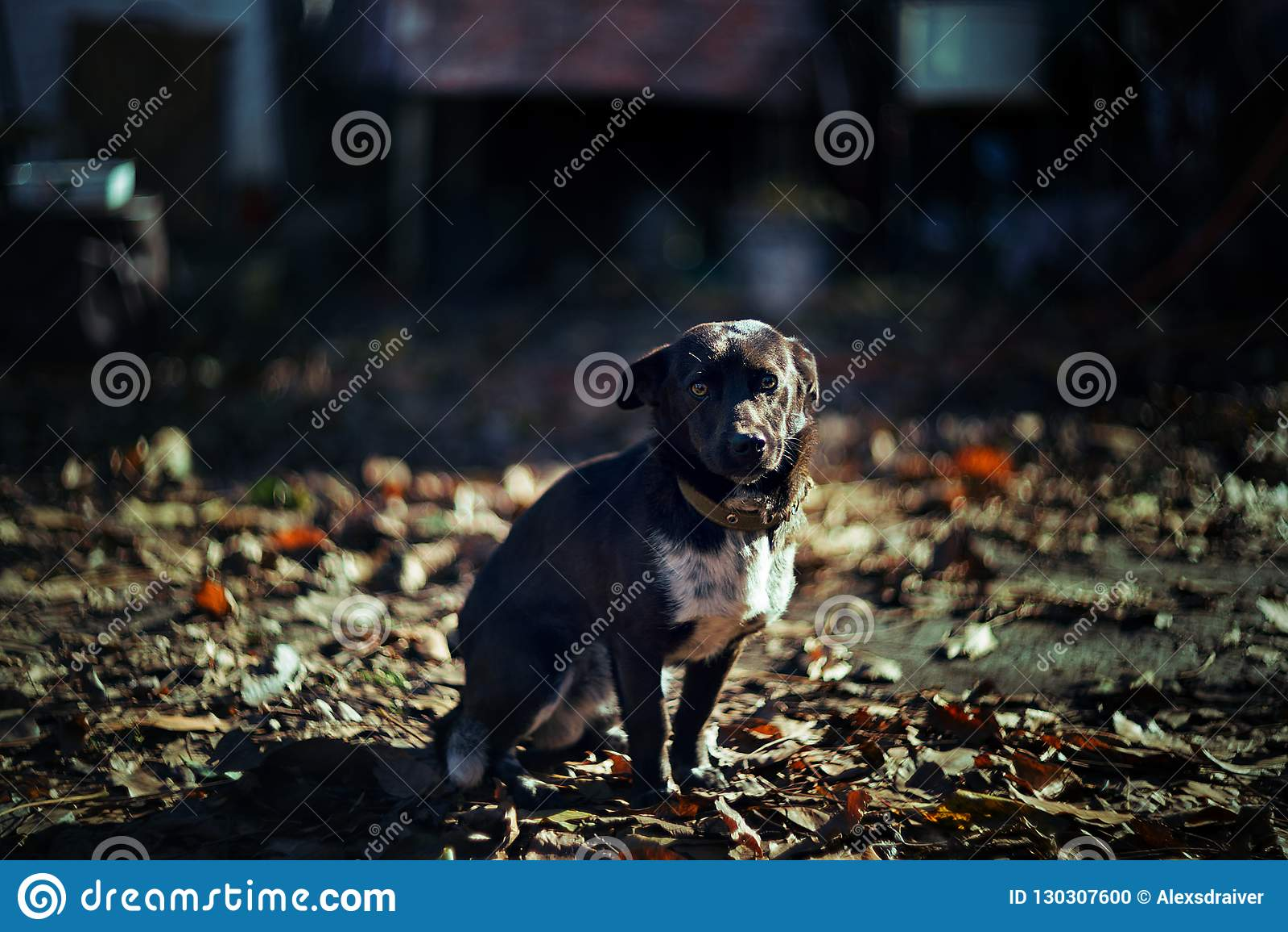 Little dog is shining