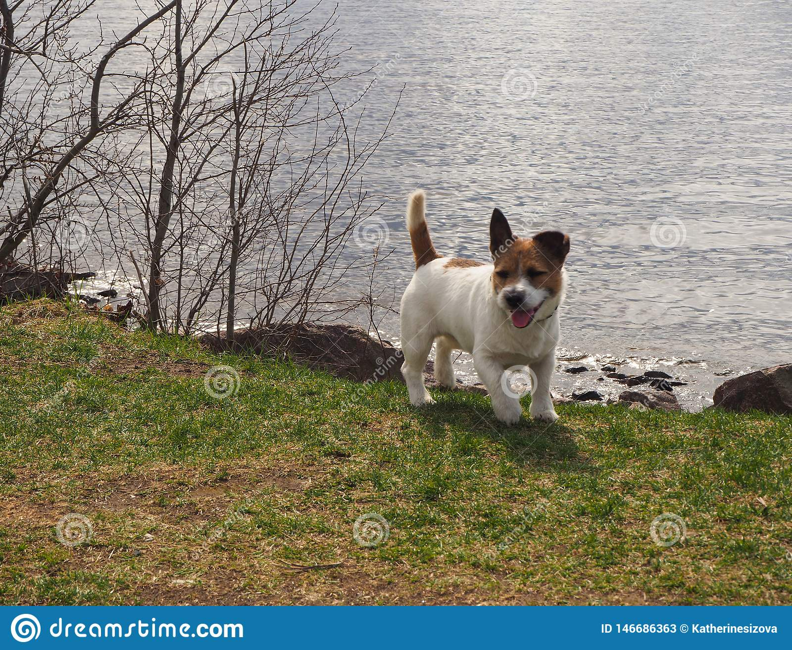 A little dog is standing on the shore with the sea background in soft focus