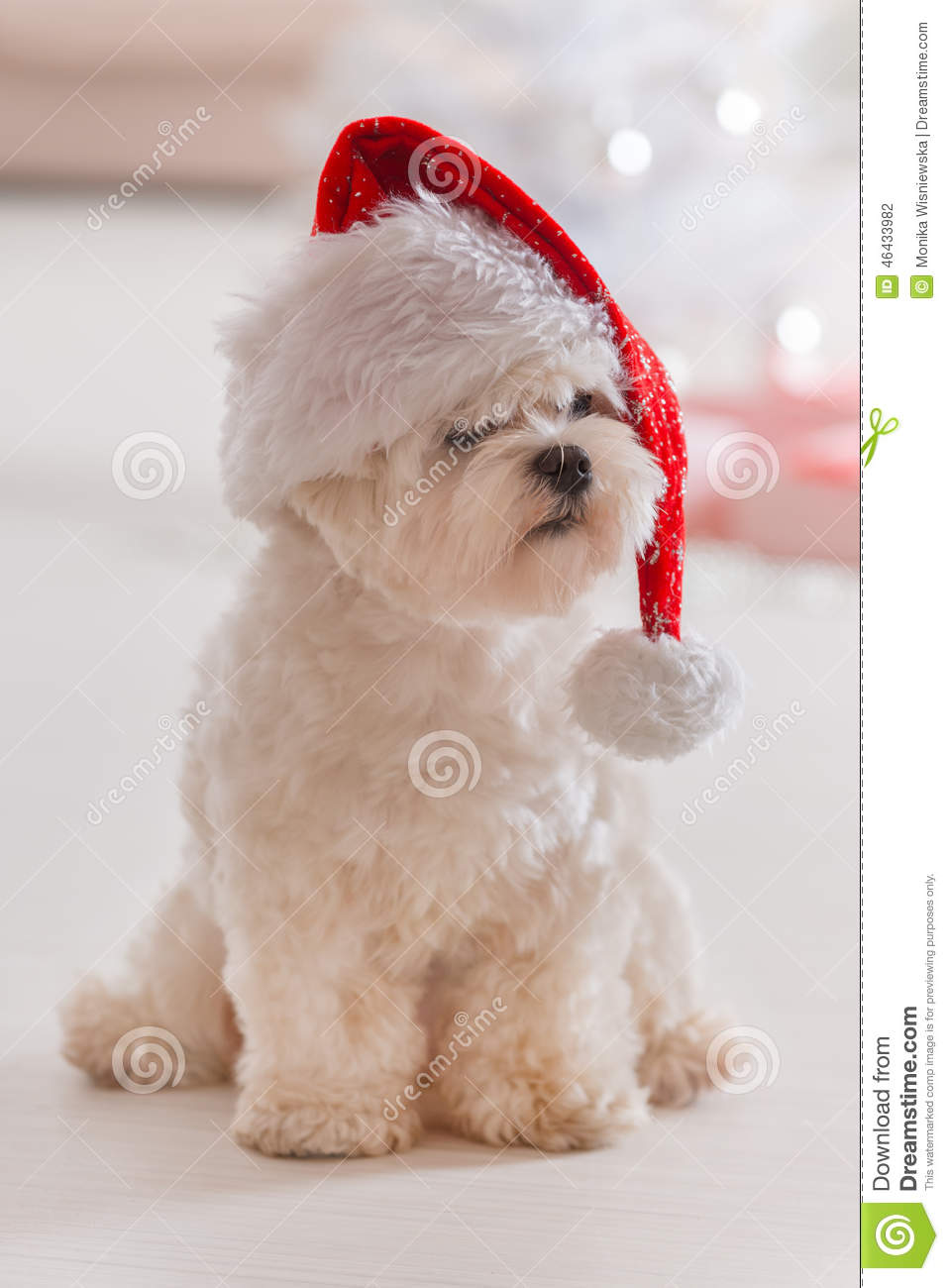 Dog Christmas Tree Hat