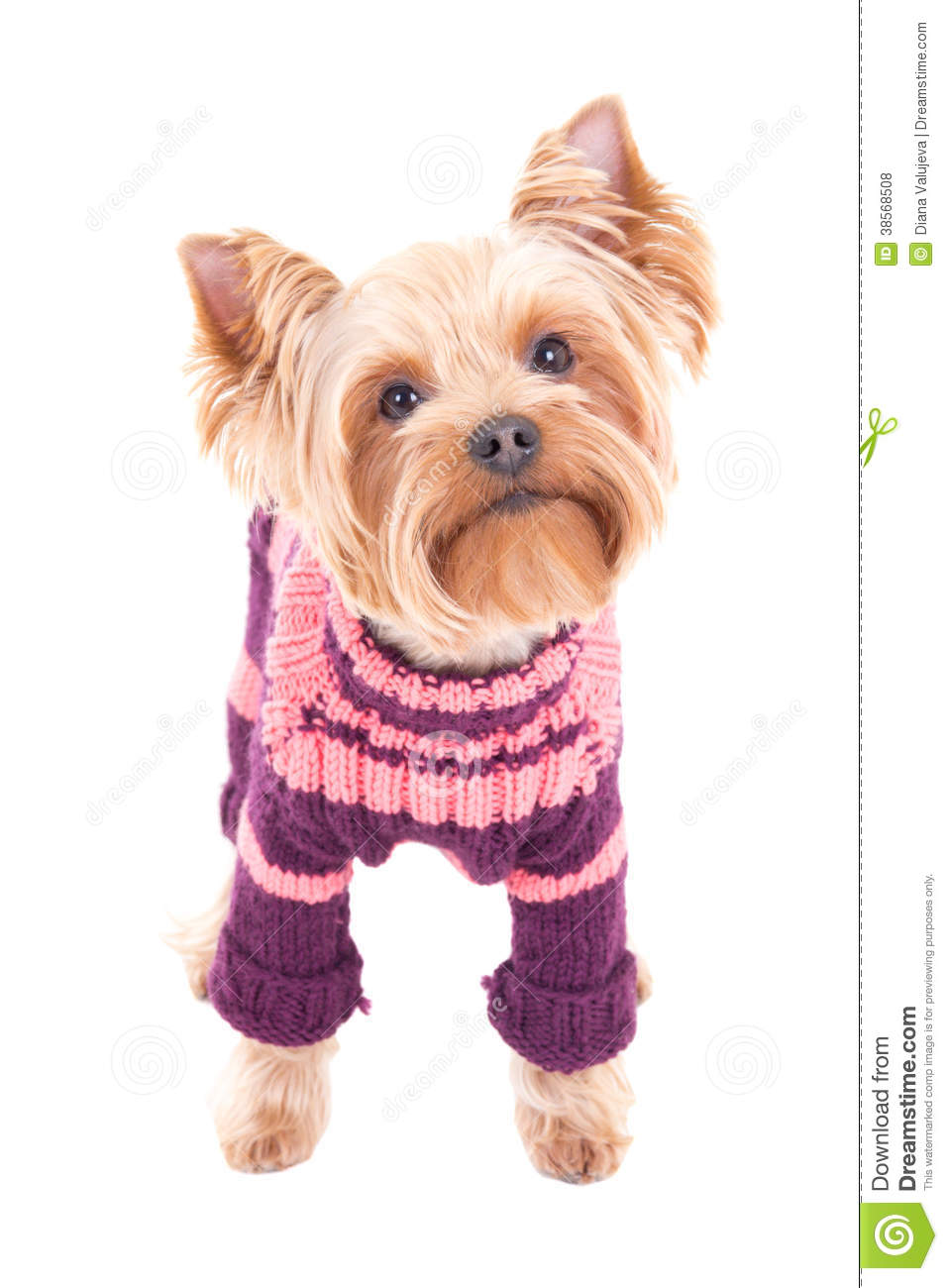 Dogs In Winter Fashion