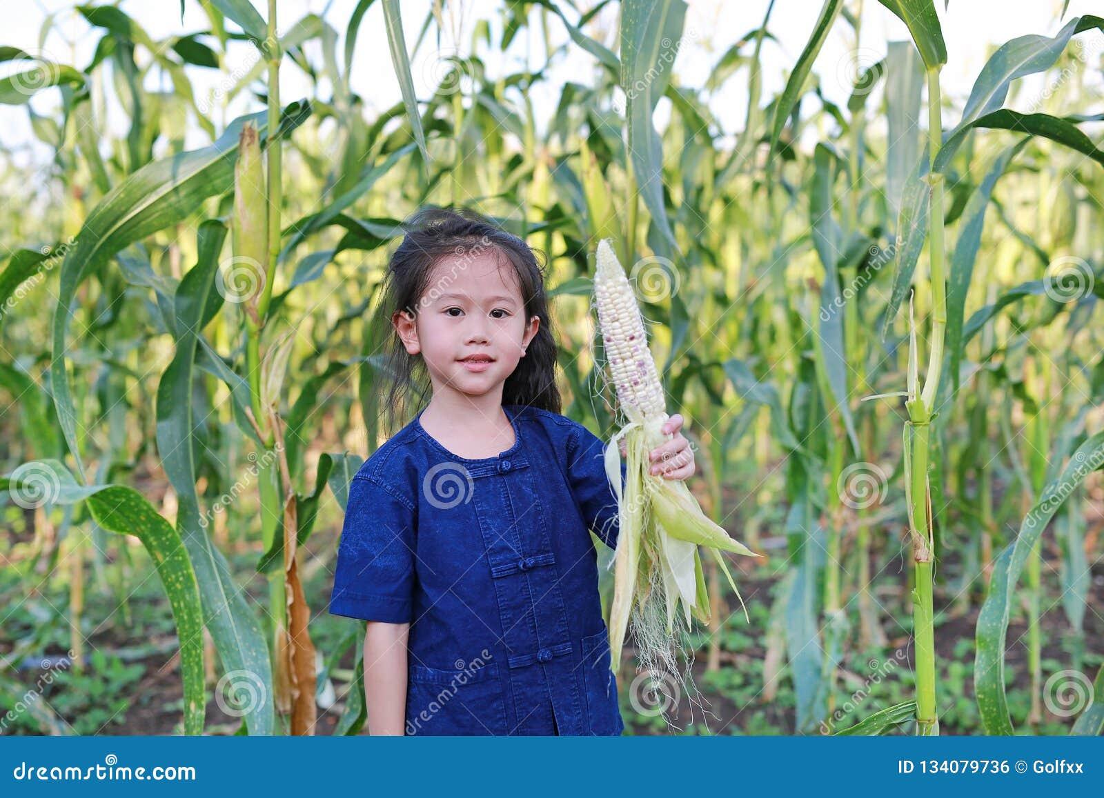 Little farmer harvest fresh corn on agriculture plantation