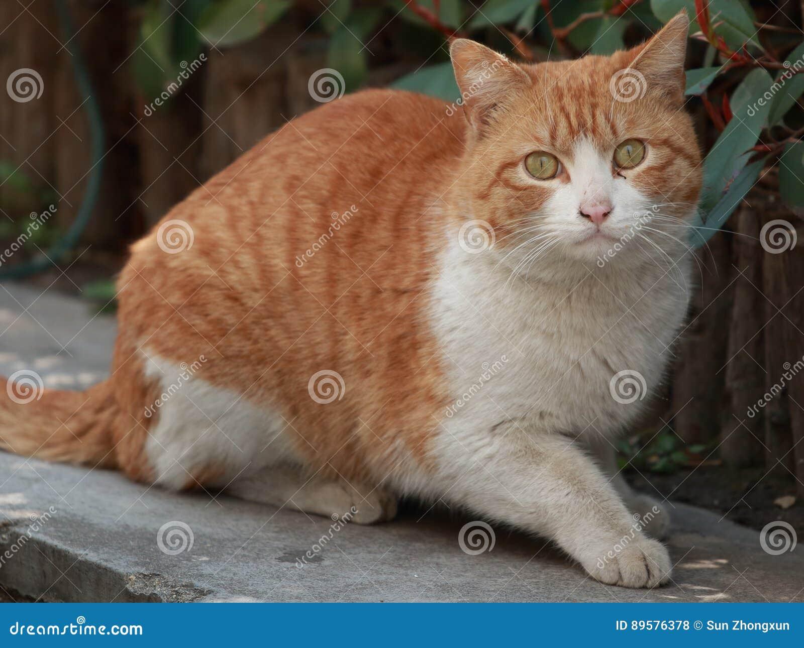 Matchless fatty chubby kitties