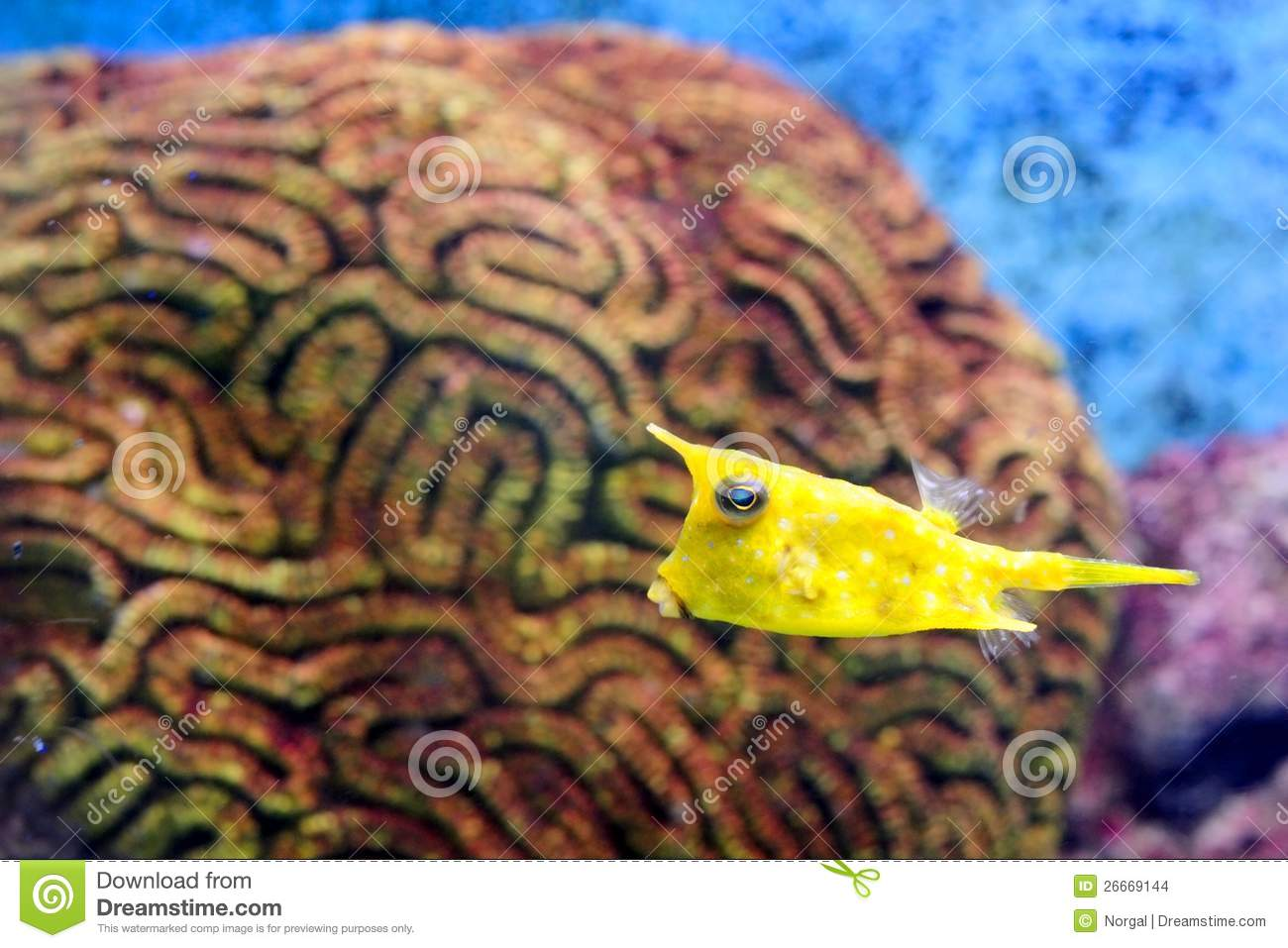 Little Fish Stock Images Image 26669144