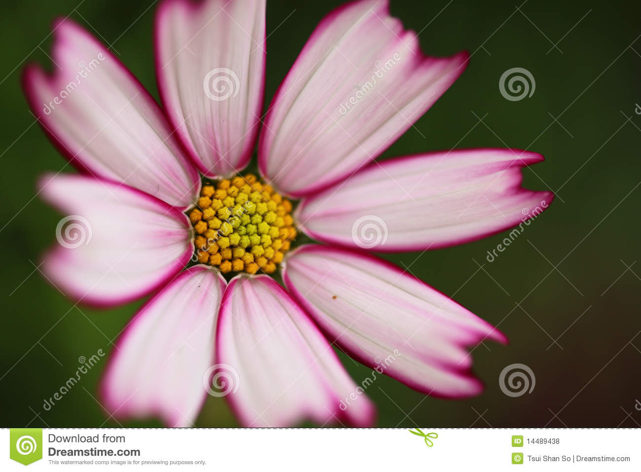 Little Flower Royalty Free Stock s Image