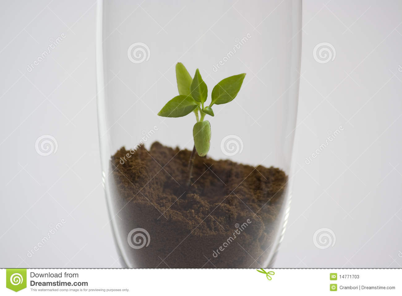 Little Flower In A Glass Stock s Image