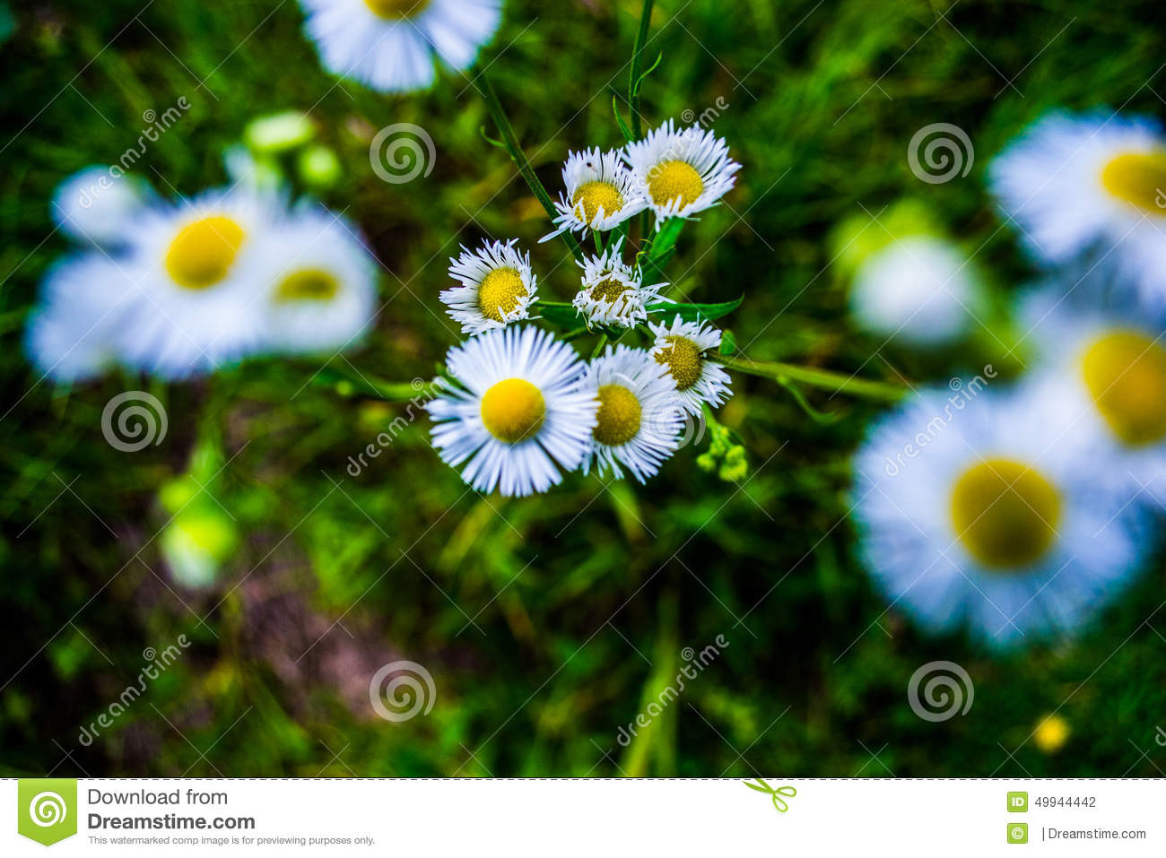 Little Flower Stock Image
