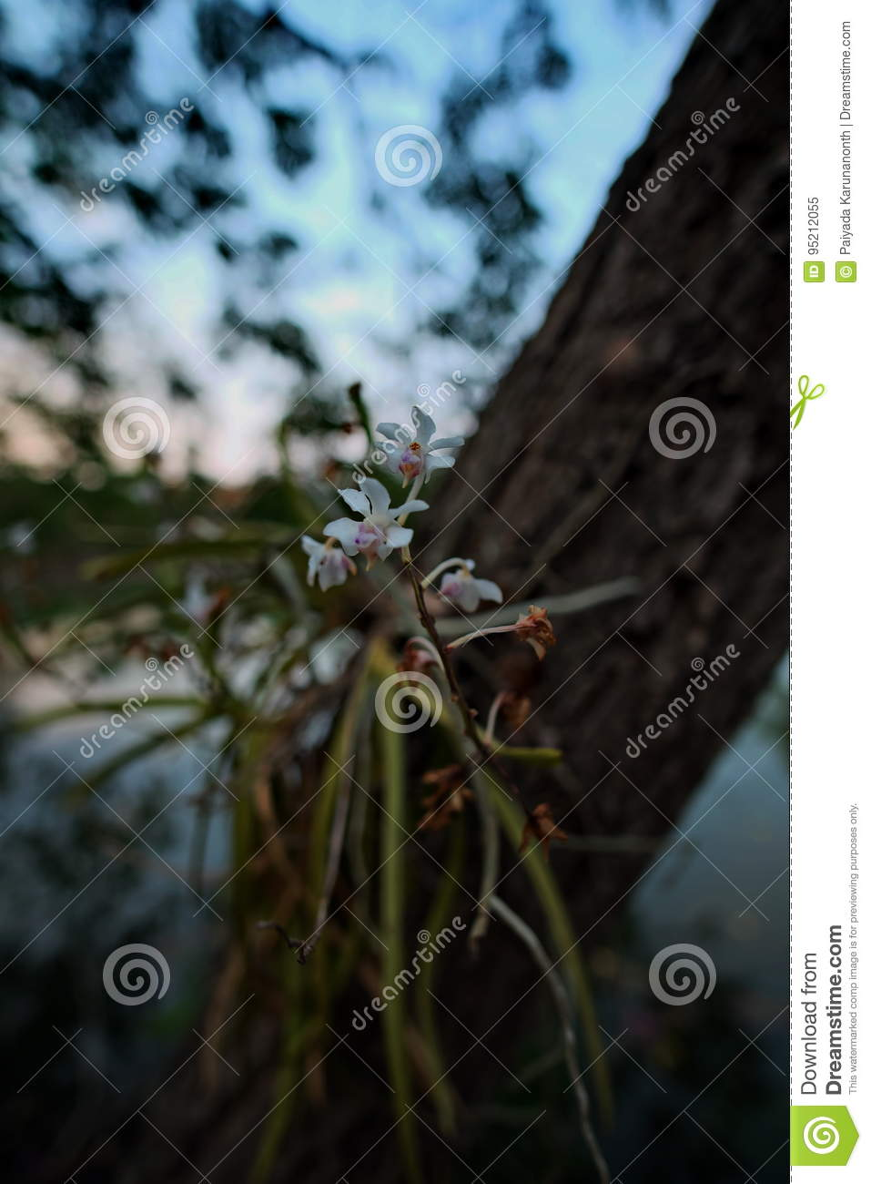 The little flower stock image image of plants your 95212055 the little flower mightylinksfo