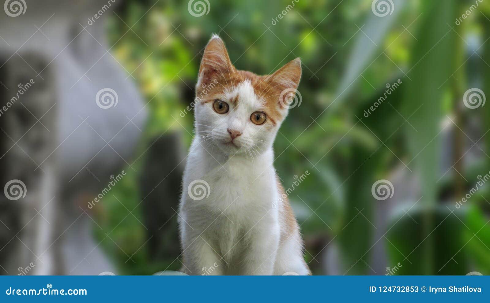Little Fluffy Kitten On The Street Stock Image - Image of nature ...