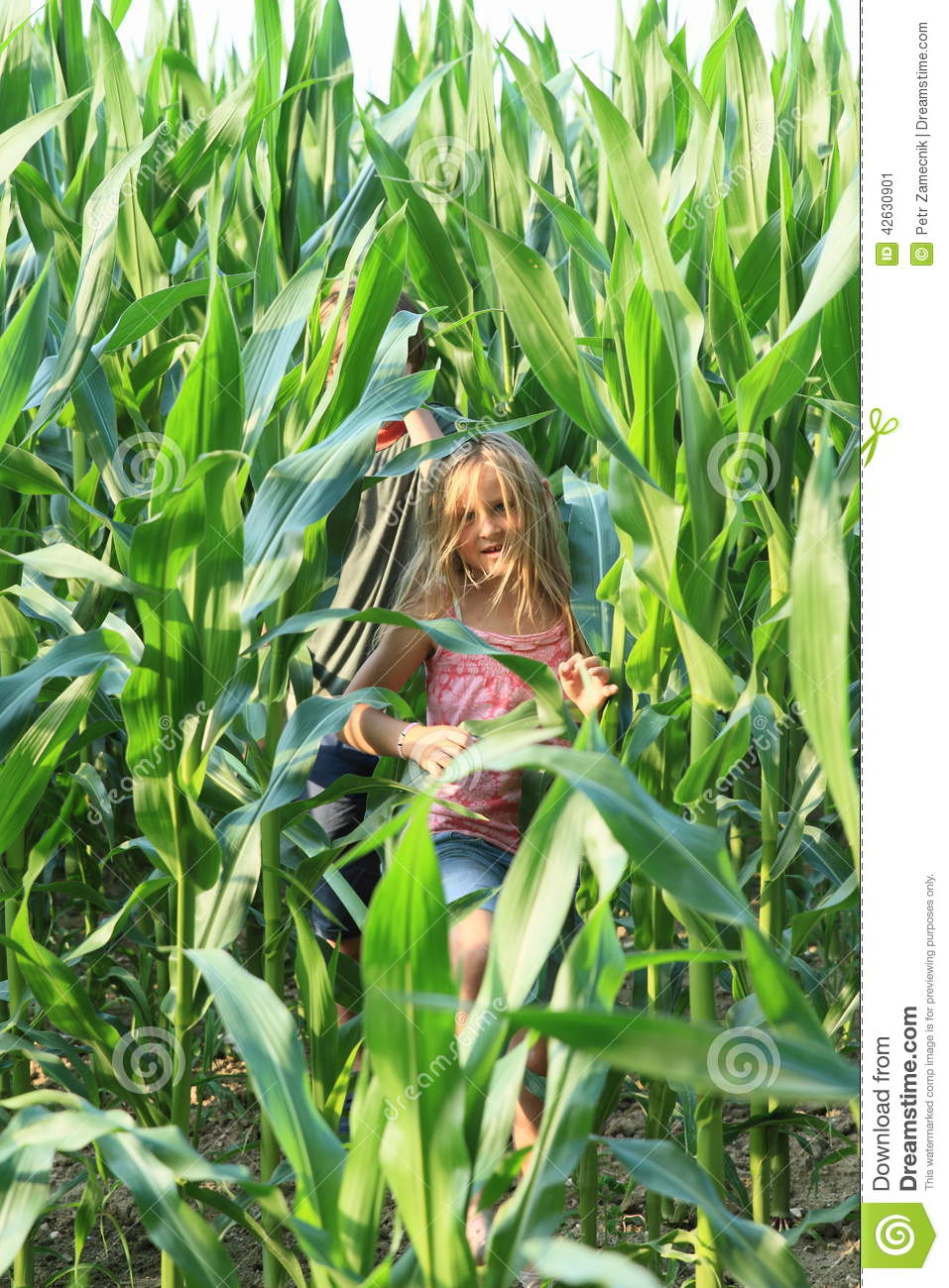 corn girls Professional quality corn field images and pictures at very affordable prices with over 50 million stunning photos to choose from we've got what you need.