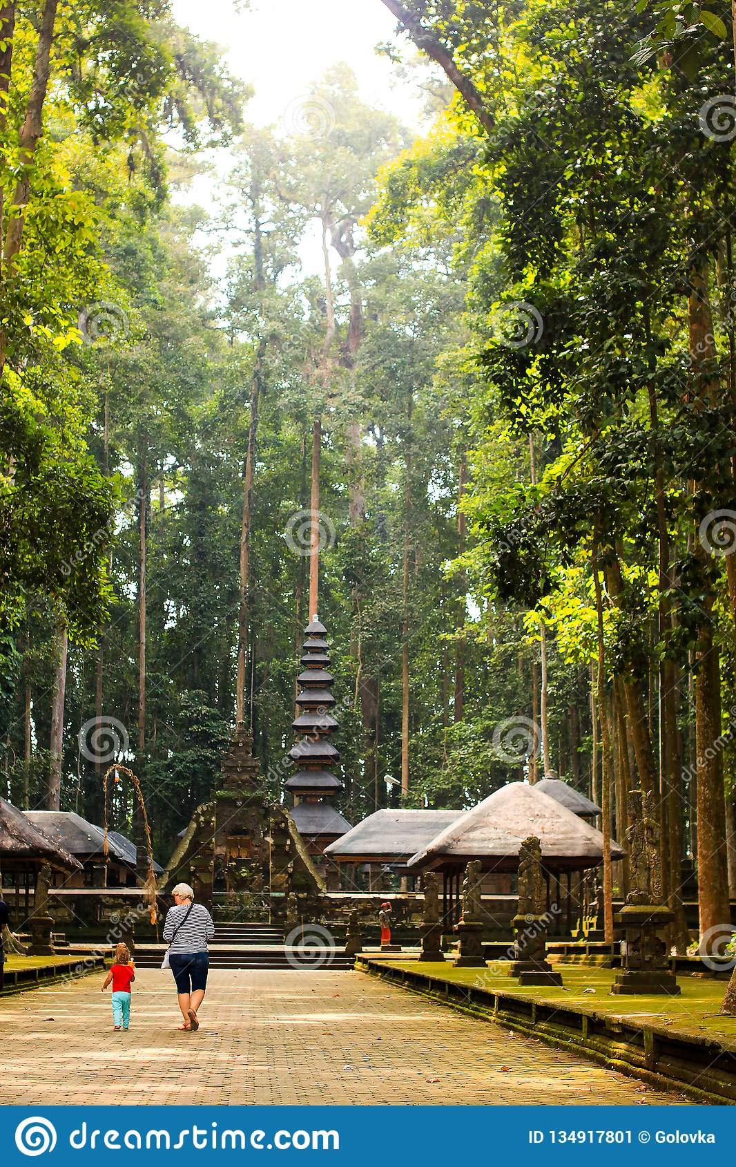 Sangeh Monkey forest in Bali, Indonesia