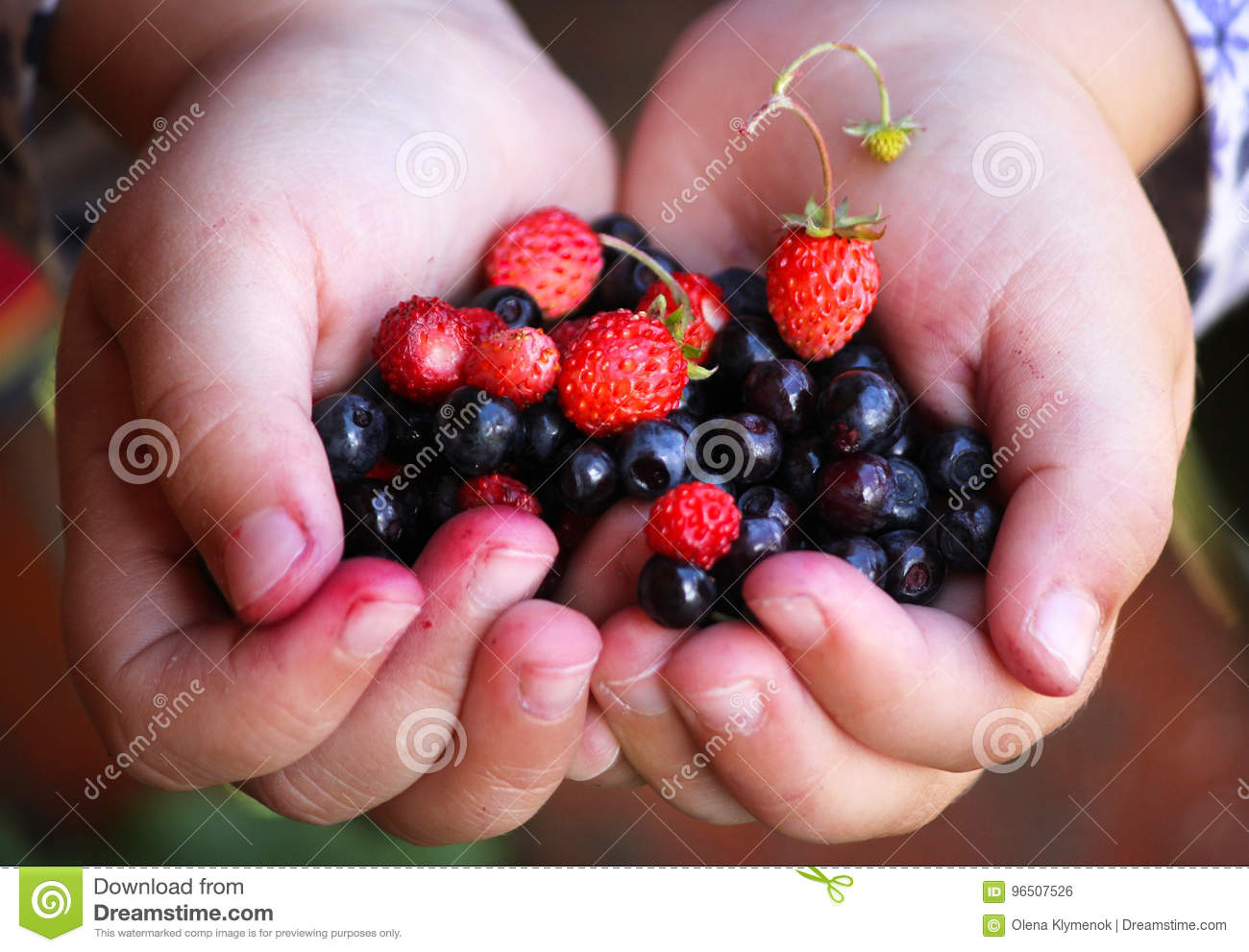 Little girl holding forest berries in open palms.