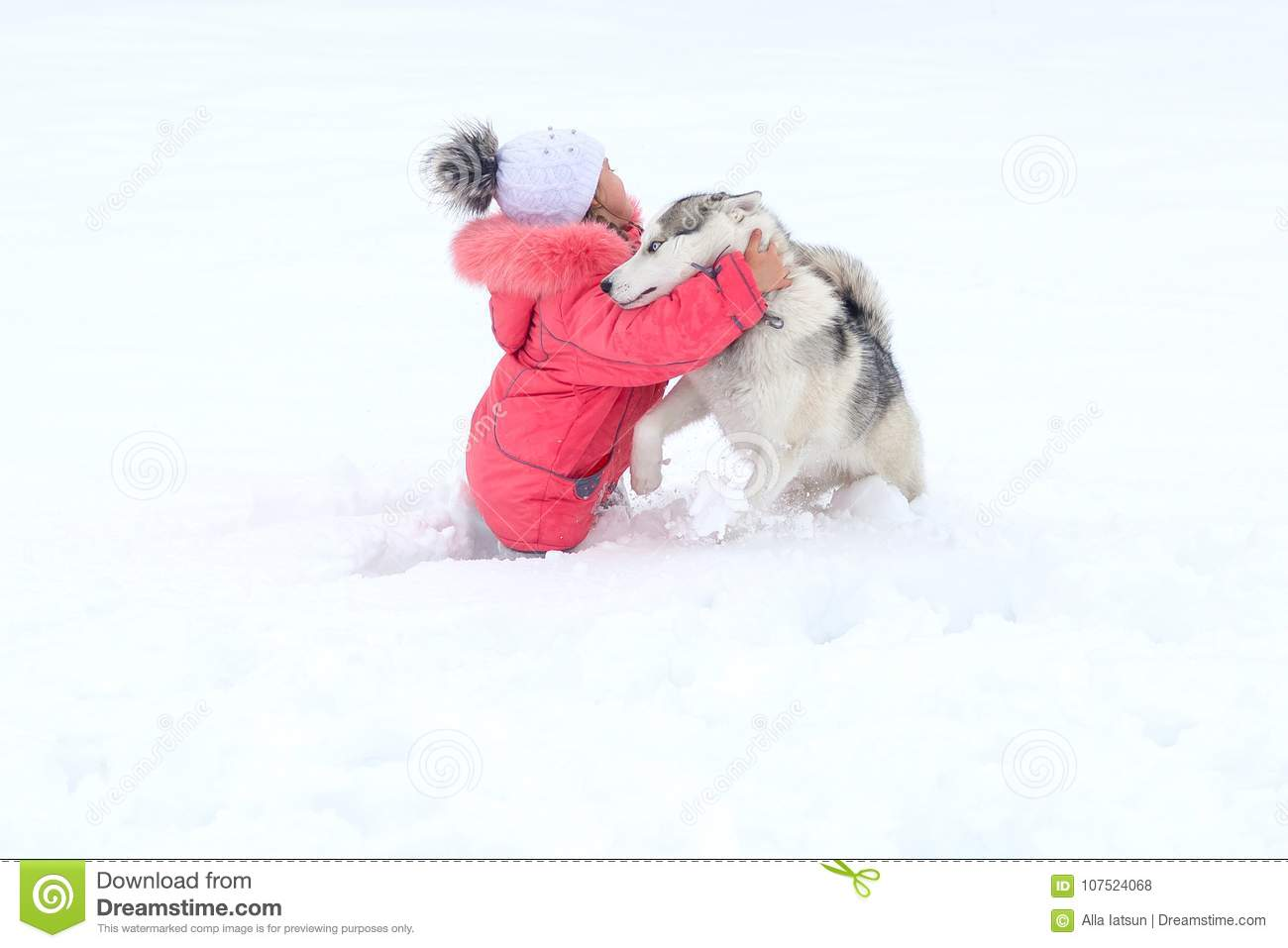 9d1dd94b171 Little girl hugging a Husky dog in the snow in the countryside. Little girl  playing with a Siberian husky breed dog in the winter in the snow