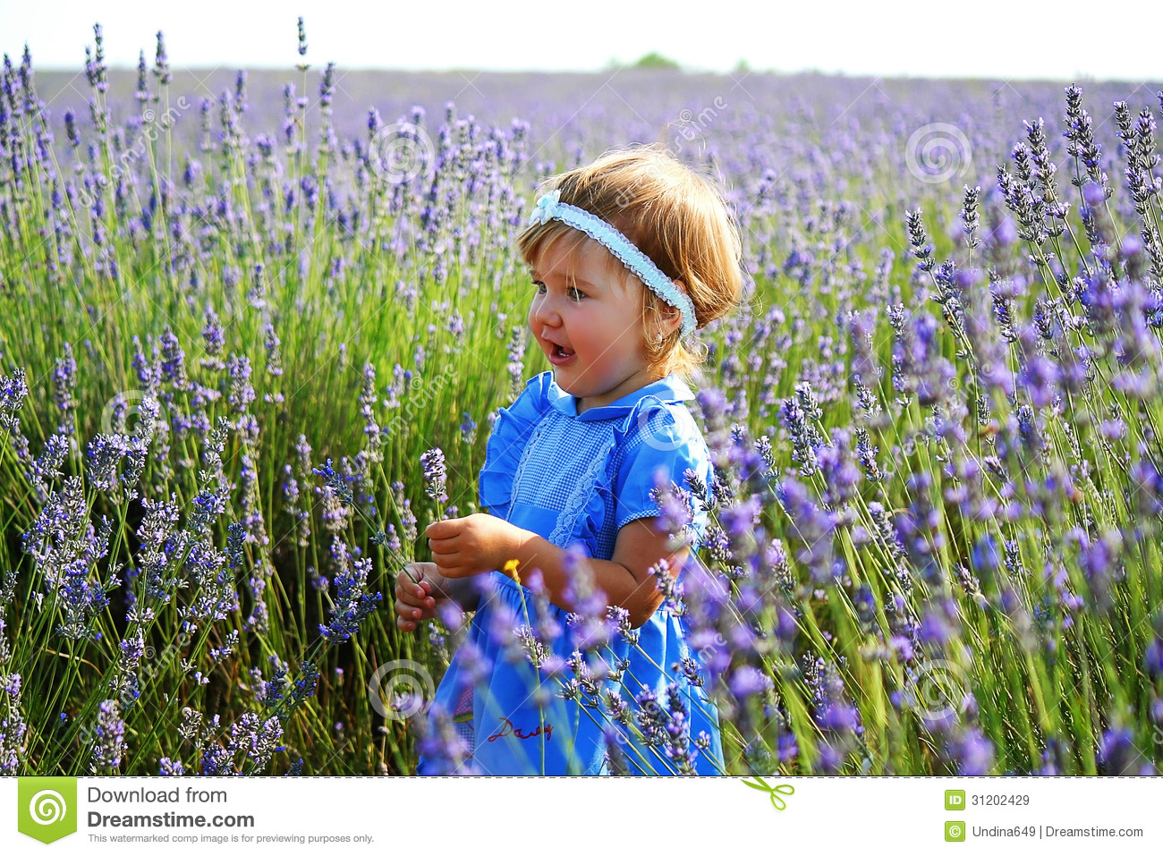 Little Girl In A Lavender Field Stock Image Image 31202429