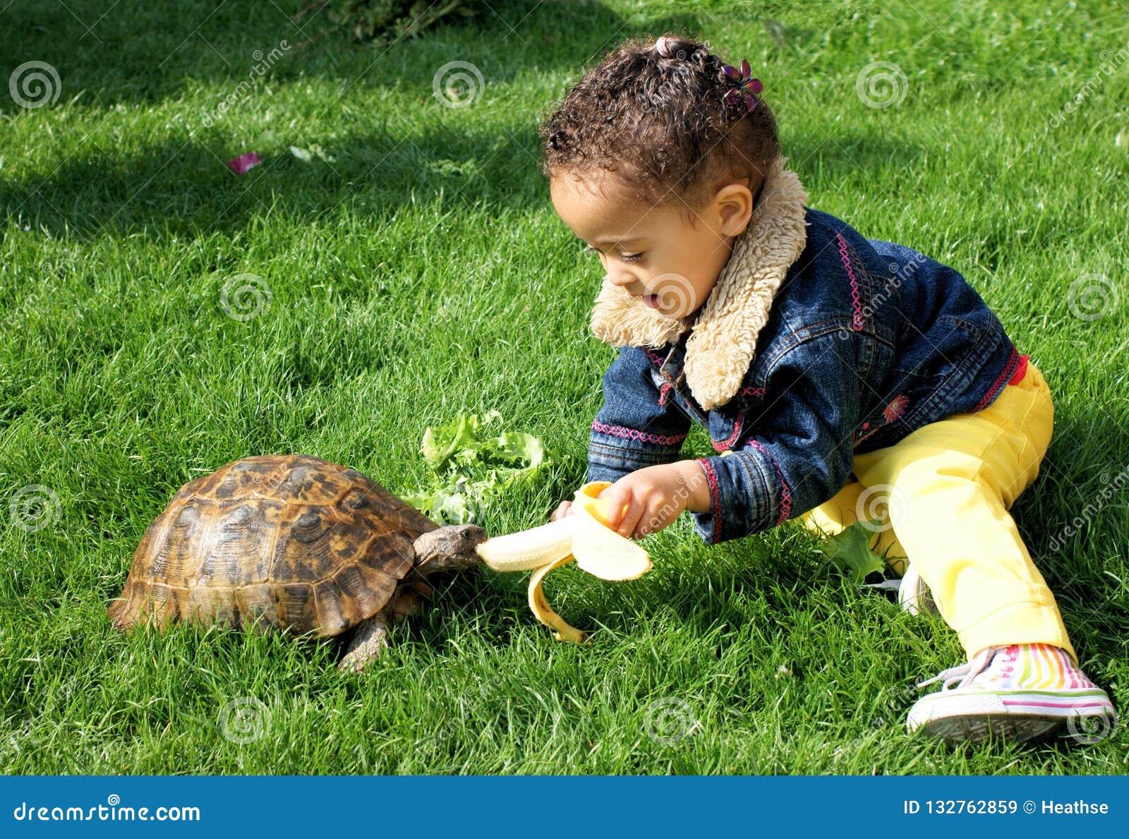 Little girl lovingly feeding her tortoise with a banana