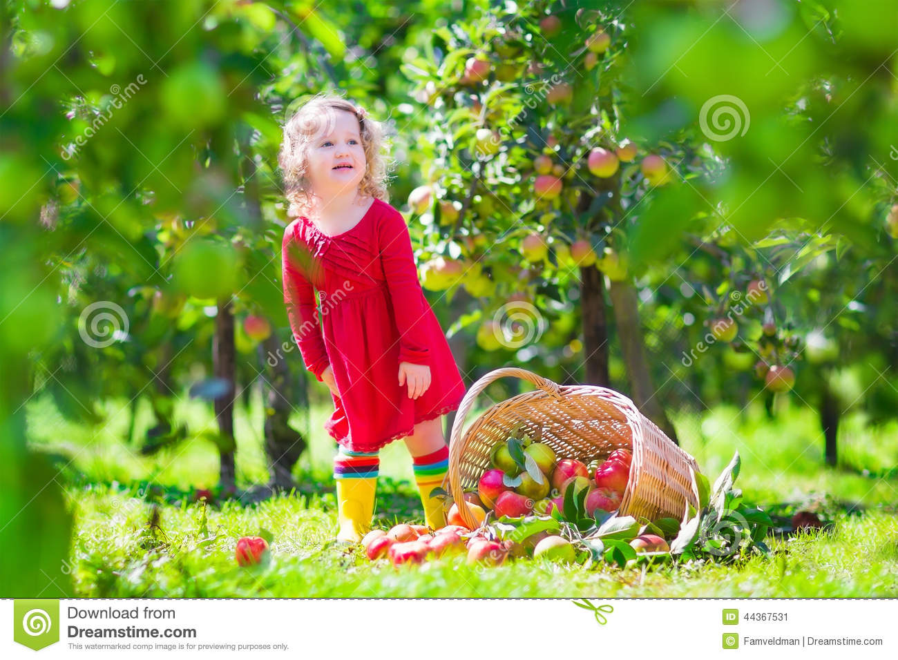 358861c24c6 Little Girl Next To A Tipped Over Apple Basket Stock Image - Image ...