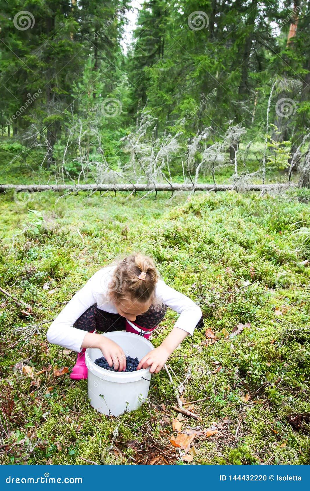 Little girl picking blueberries in summer forest