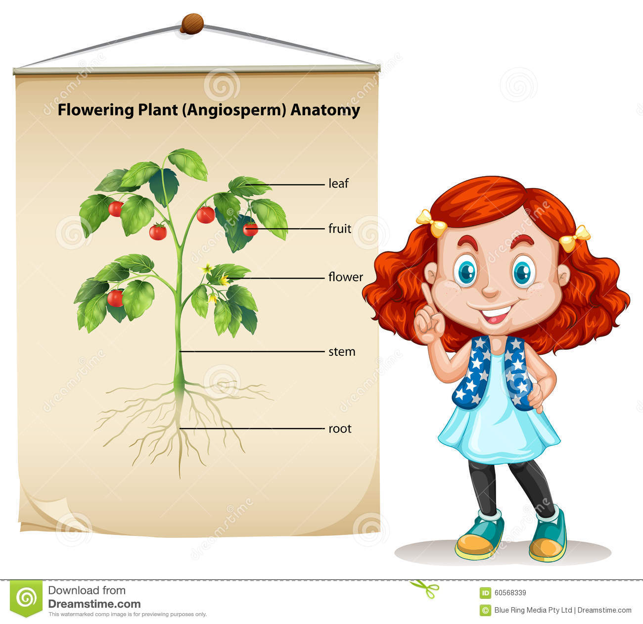 Little Girl And Plant Anatomy Stock Vector Illustration Of Small