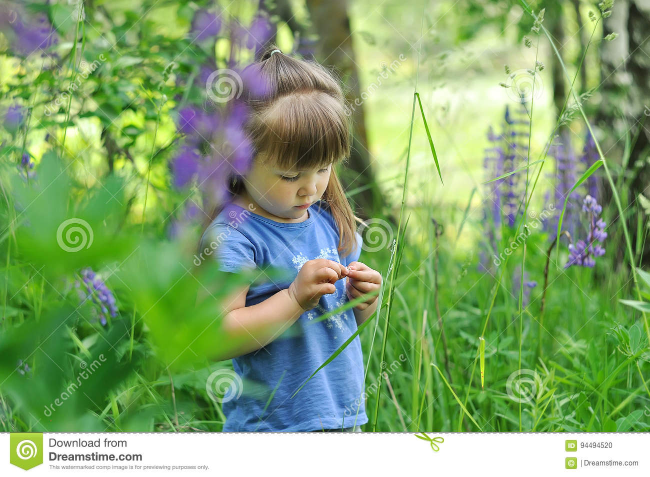 Download Little Girl Playing In Sunny Blooming Forest. Toddler Child Picking Lupine Flowers. Kids Play Outdoors. Summer Fun For Family With Stock Photo - Image of dress, hunt: 94494520