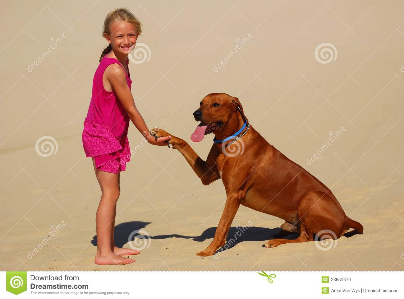 Download Little Girl Shaking Dog Paw Stock Photo - Image of little, dress: 23651670