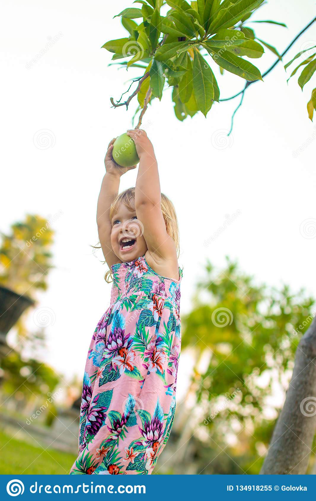 Little girl trying to get a pomello from the tree