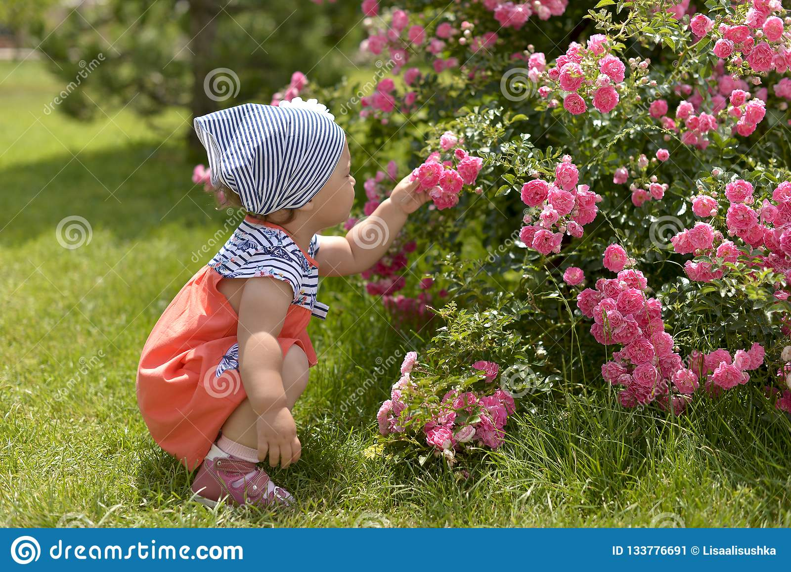 Little girl in walking in the garden, sniffing pink roses.