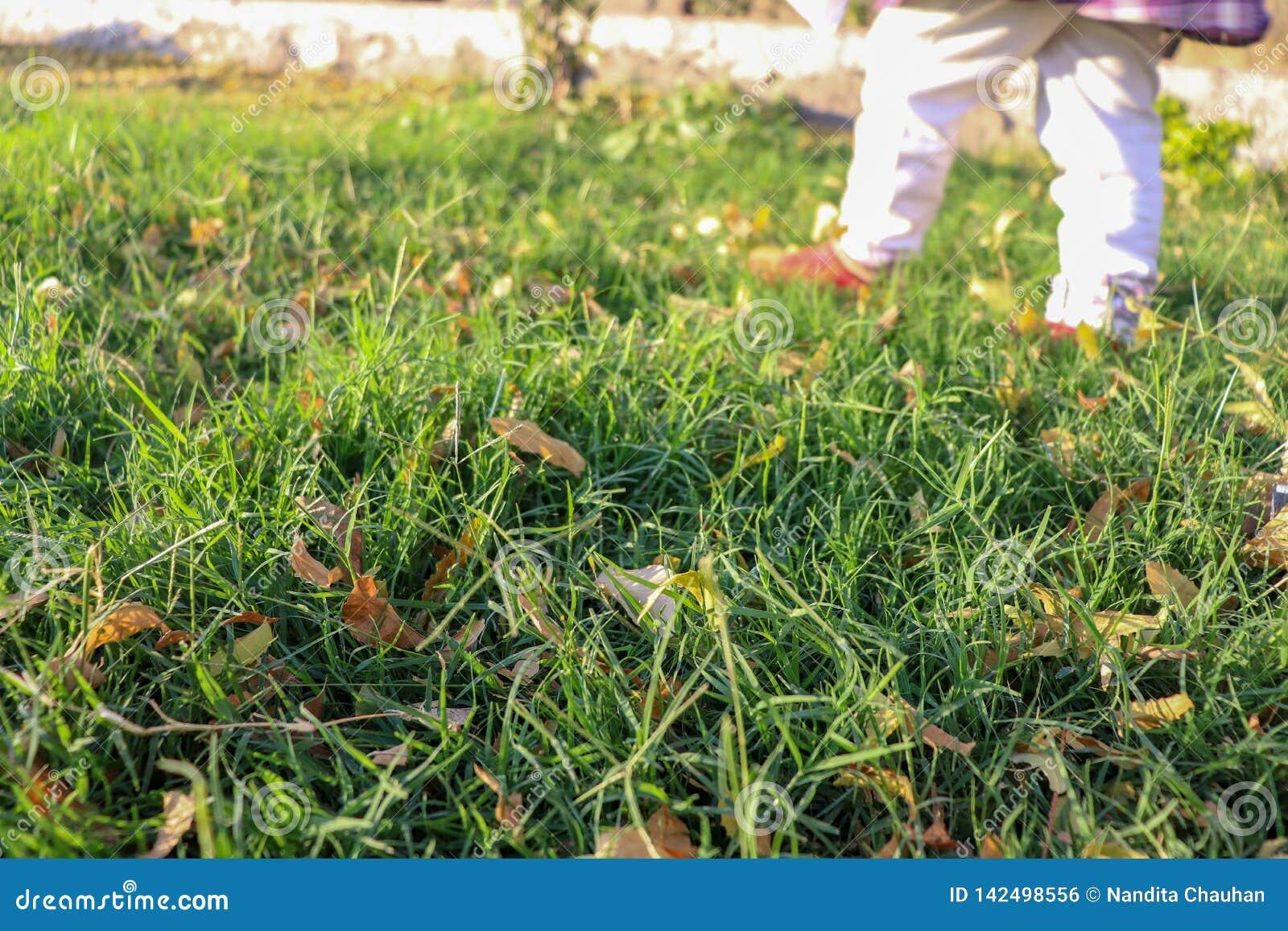 Little girl walking on the green grass in a park wearing white leggings