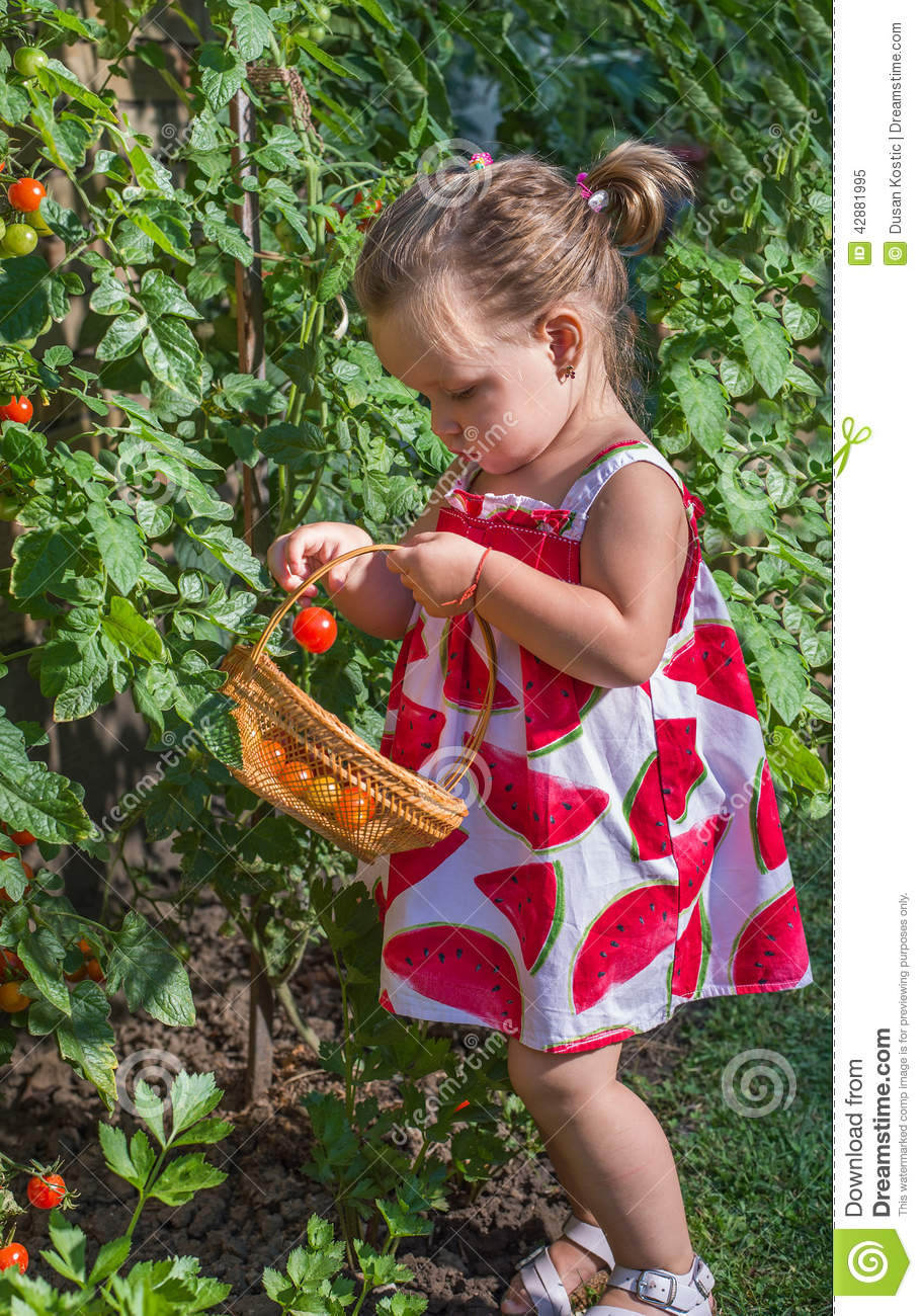 Little girls picked tomatoes