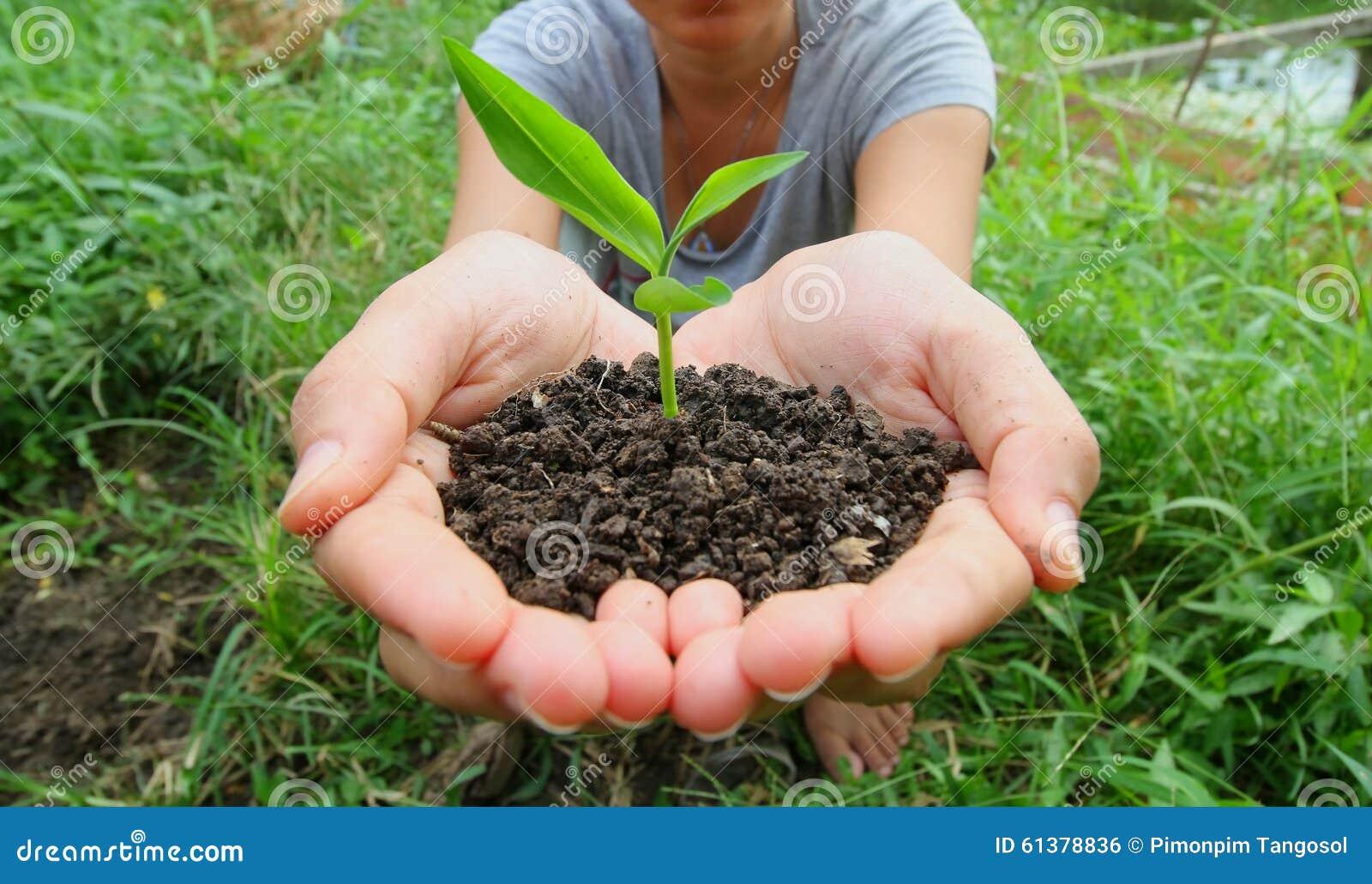 little green plant stock photo image 61378836. Black Bedroom Furniture Sets. Home Design Ideas