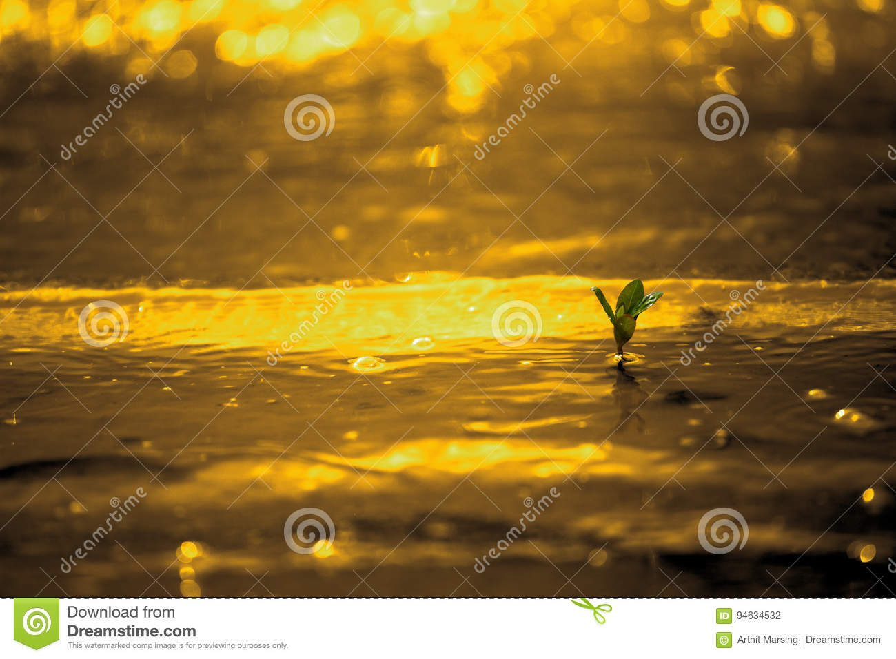 A little green plant about to impact by golden color water wave on golden background.