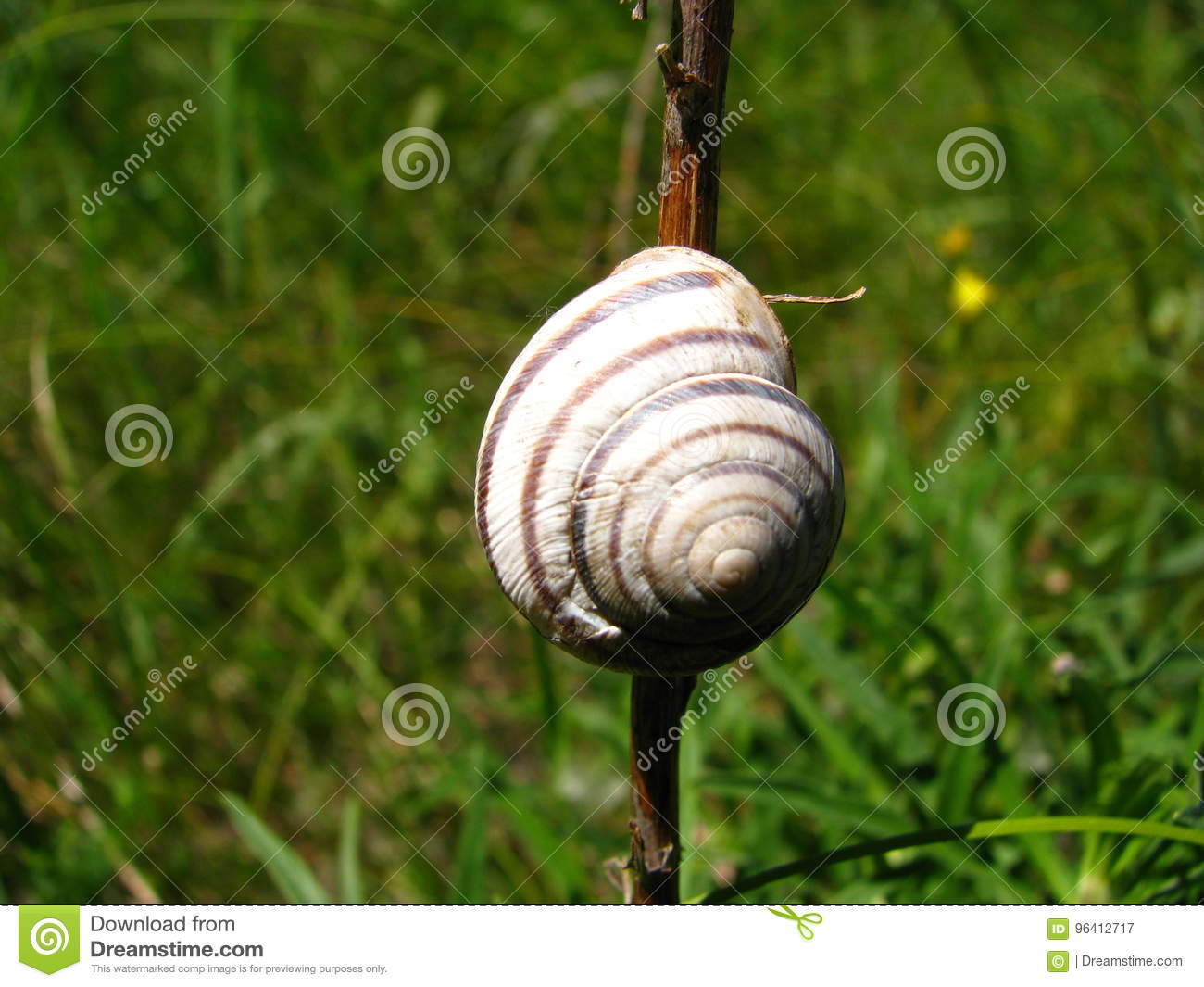 Little House Of The Snail Stock Image Grass