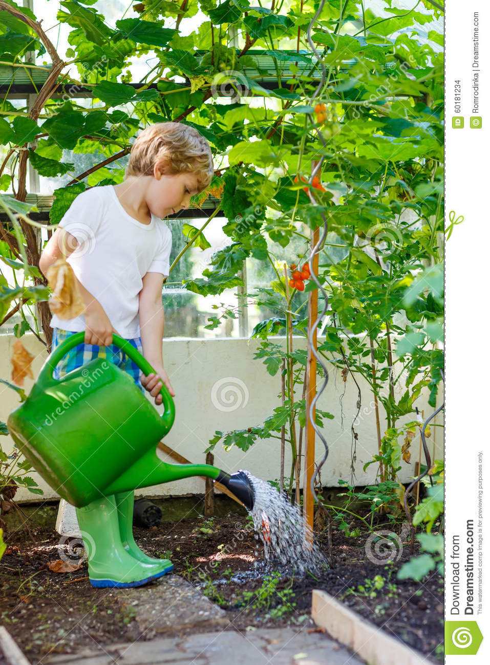 Little kid boy watering plants in greenhouse in summer for Watering vegetable garden