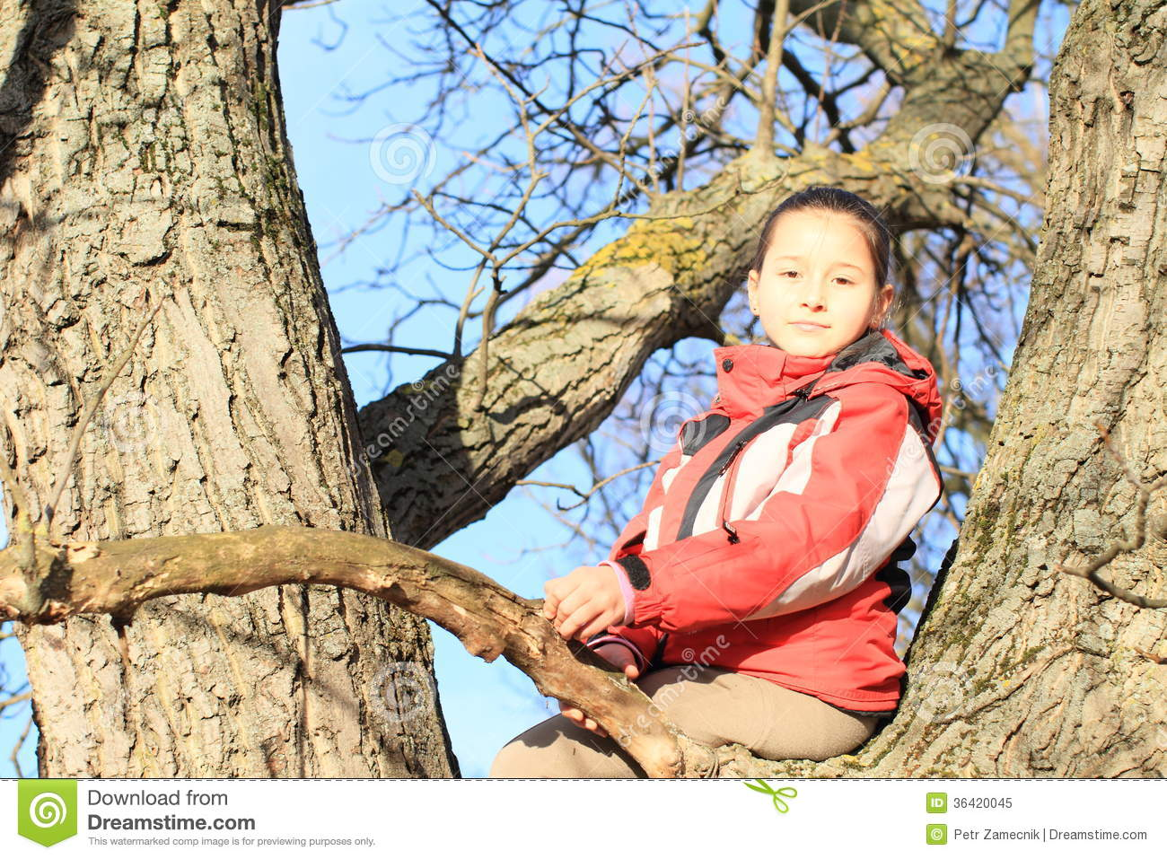 Girl sitting on a tree big that
