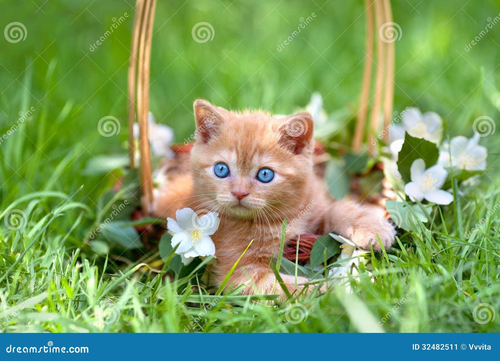 cat lady name