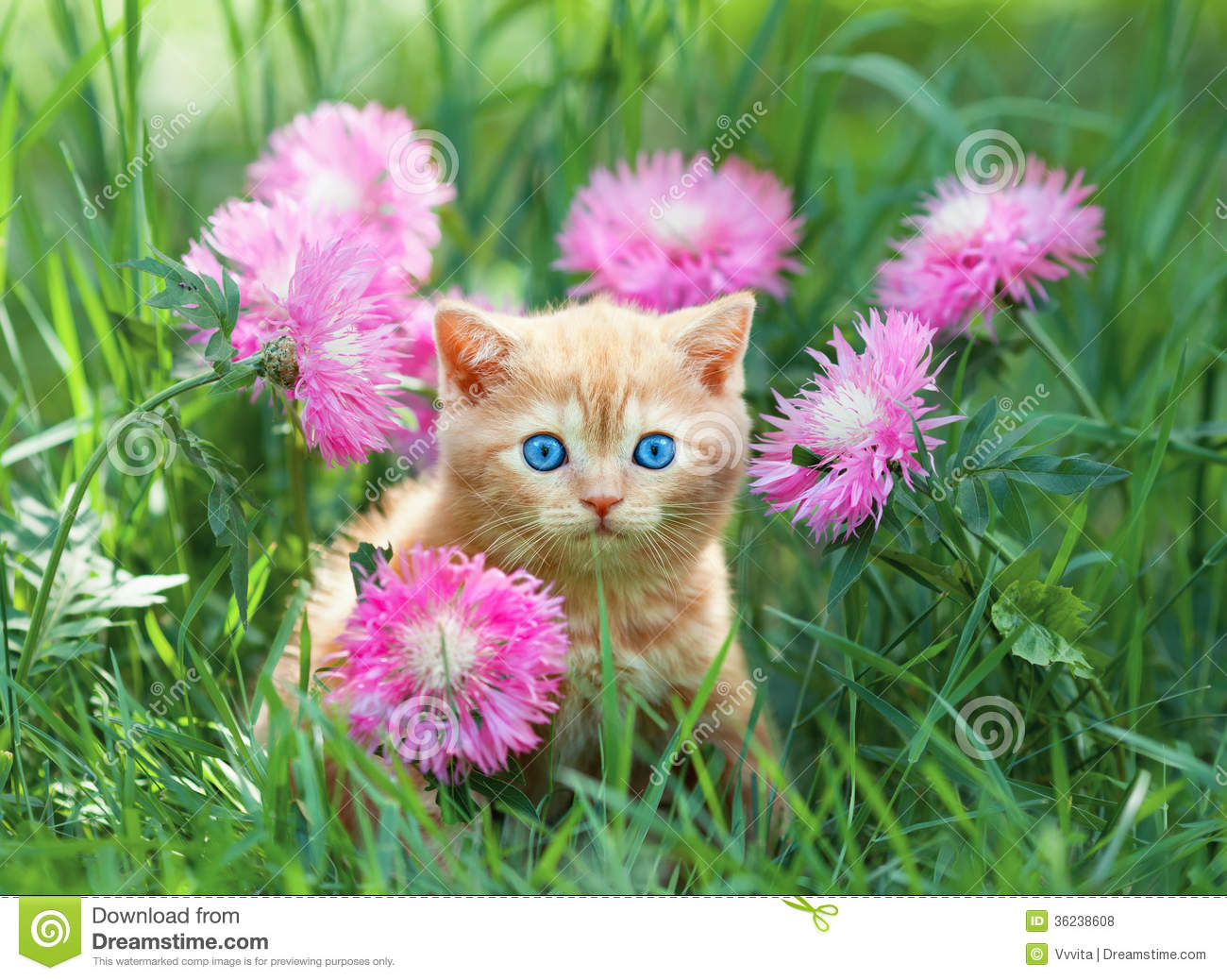 Little Kitten Sitting In Flowers Stock Photo - Image: 36238608
